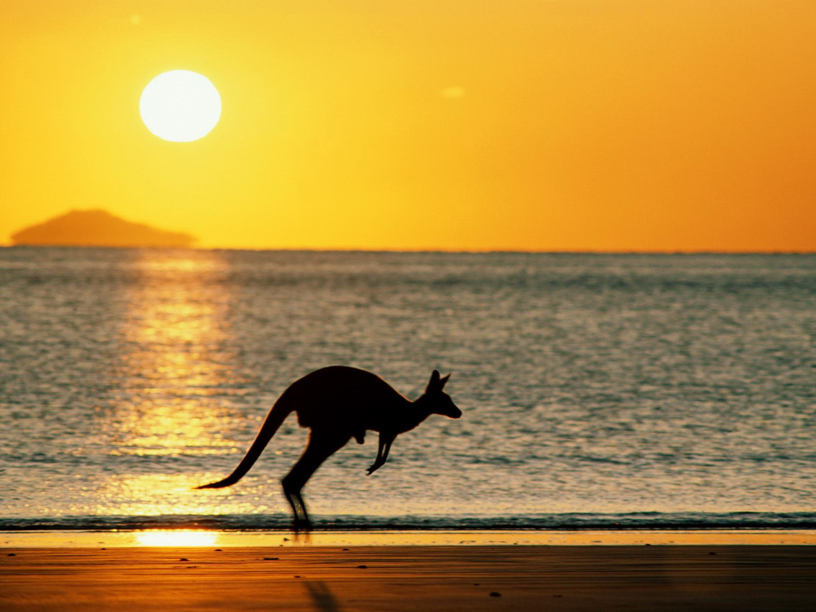 kangaroo runing Kangaroo Island AUSTRALIA www.tourismprofile.com