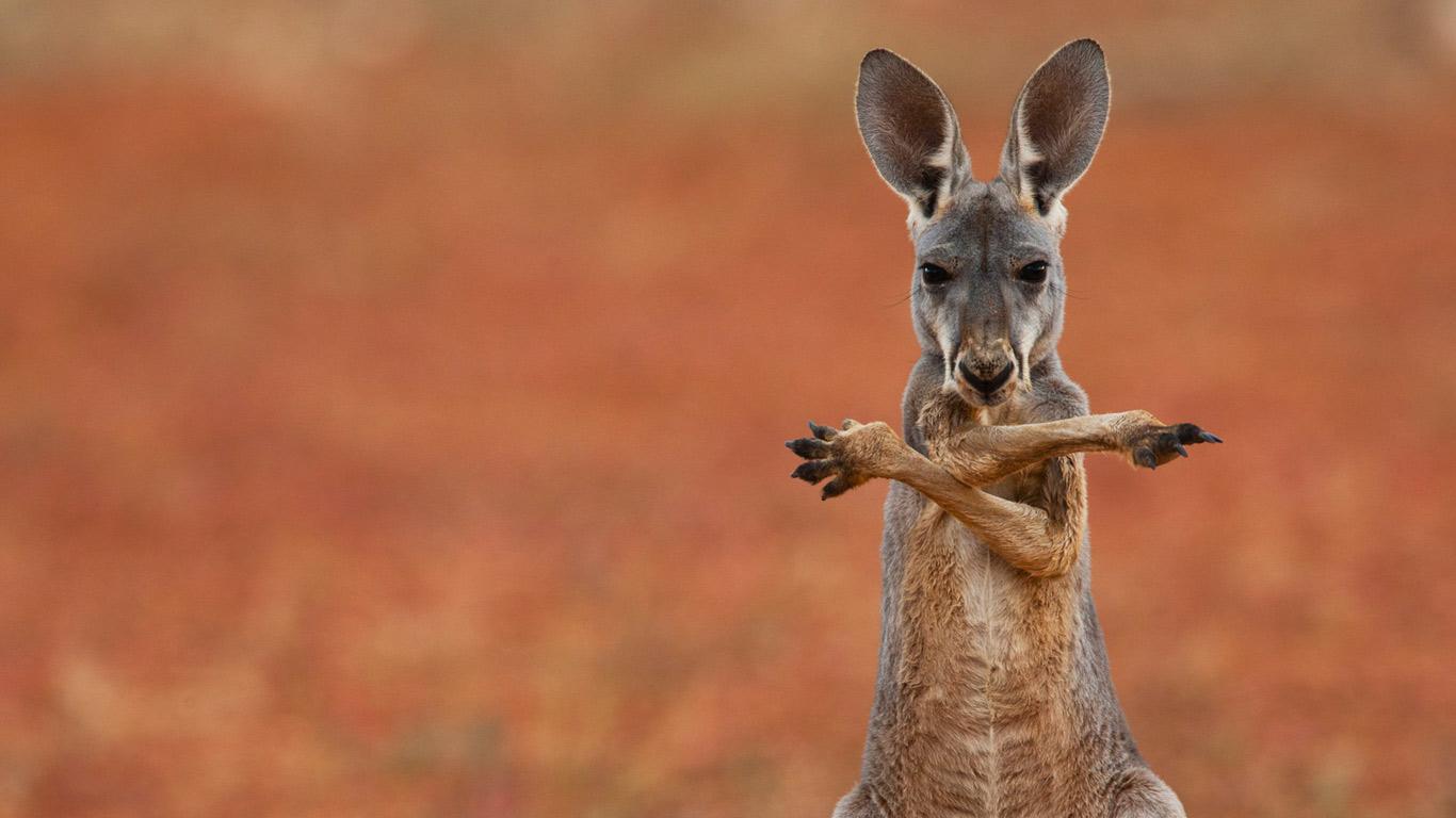 PSBYo Kangaroo ...