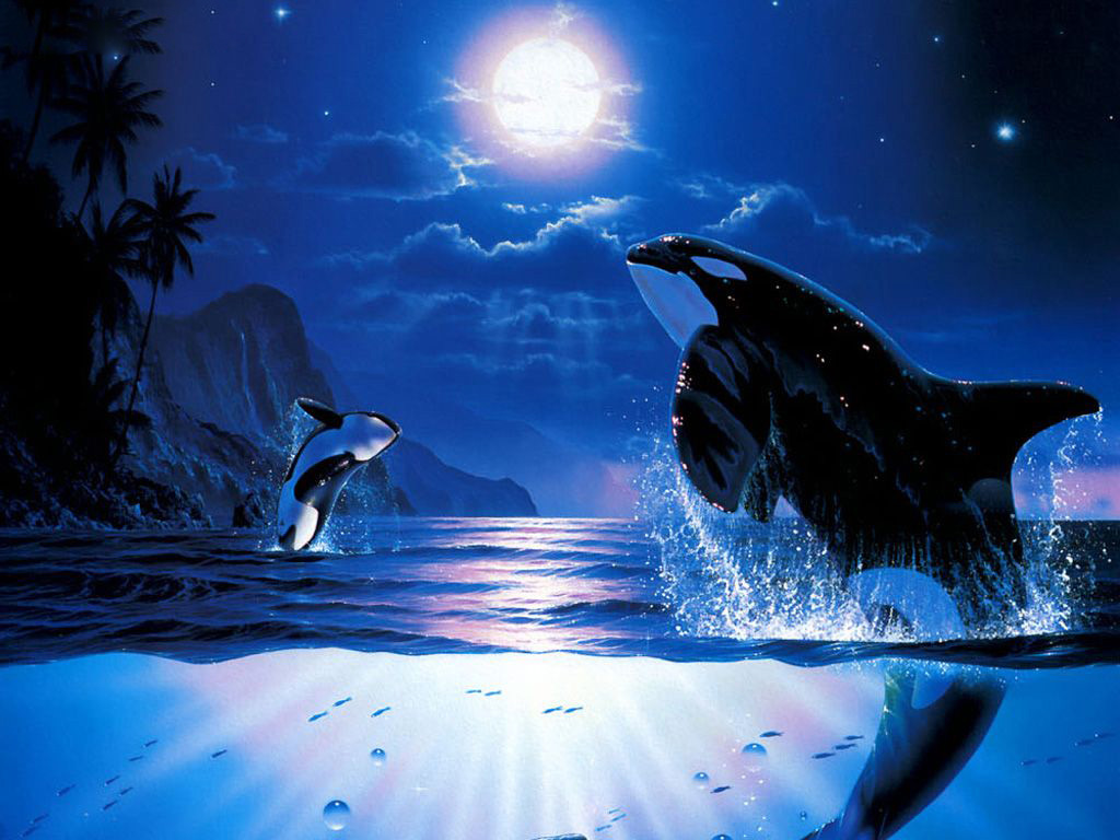 Desktop Wallpaper · Gallery · 3D-Art Killer whale dance