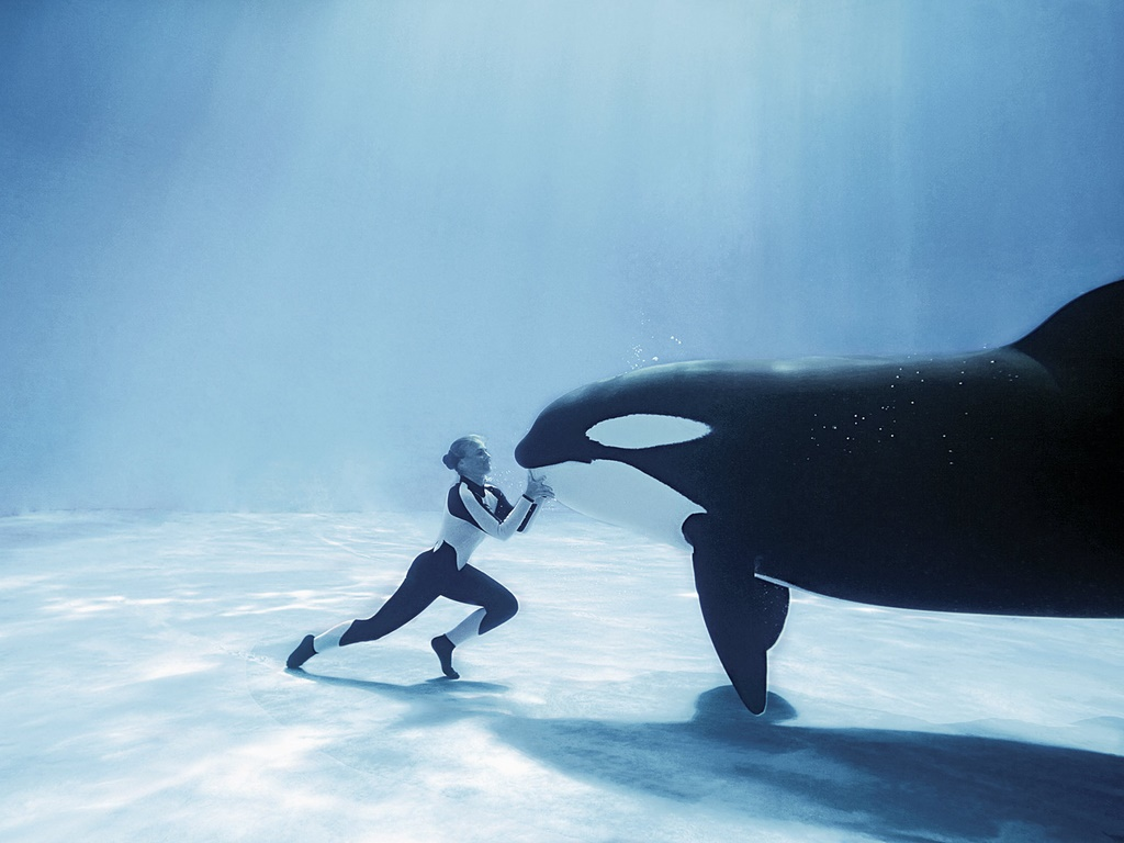 Killer Whales Free Wallpapers Desktop. Whales, Free, Desktop .