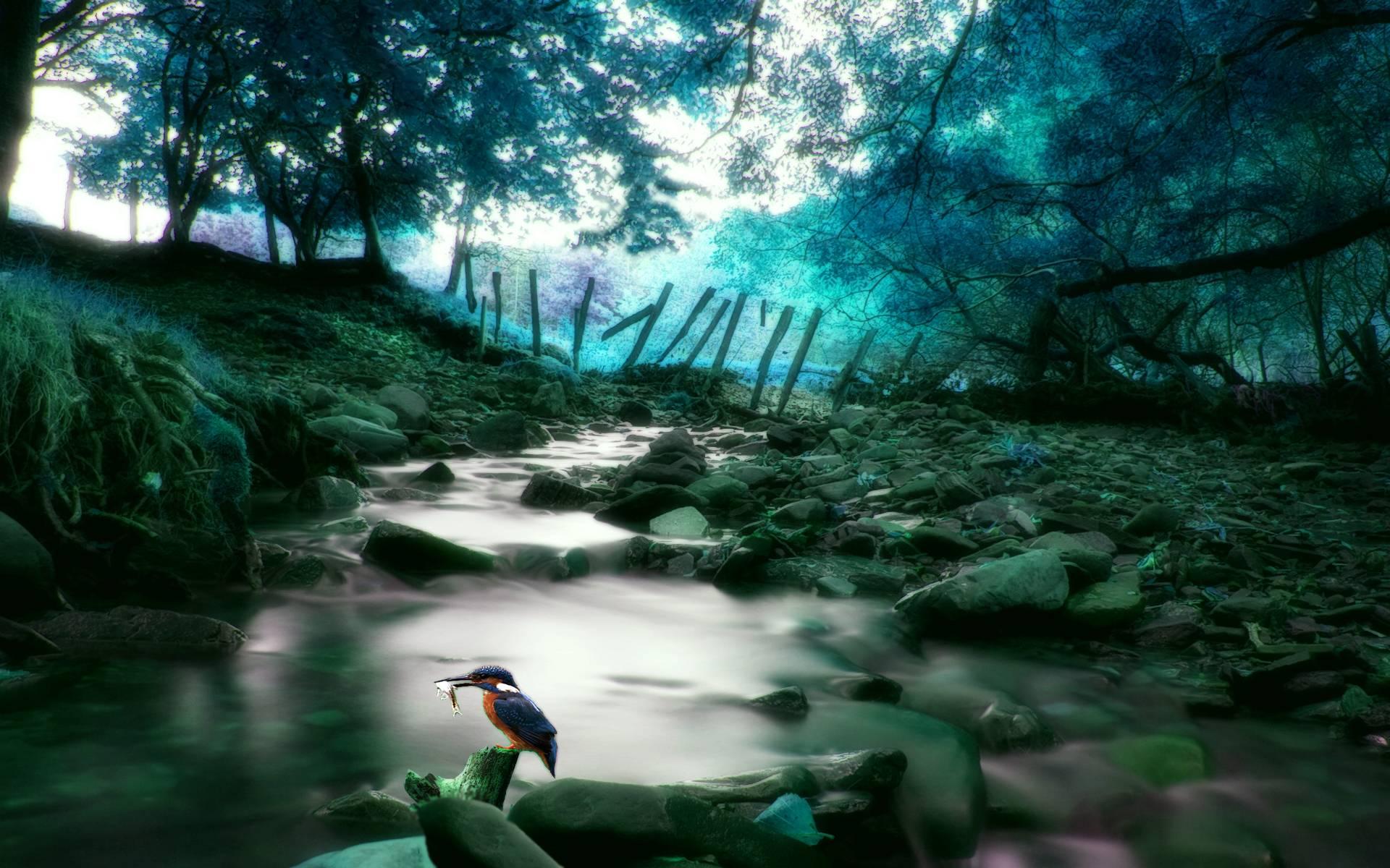Kingfisher Background 38975 2560x1600 px