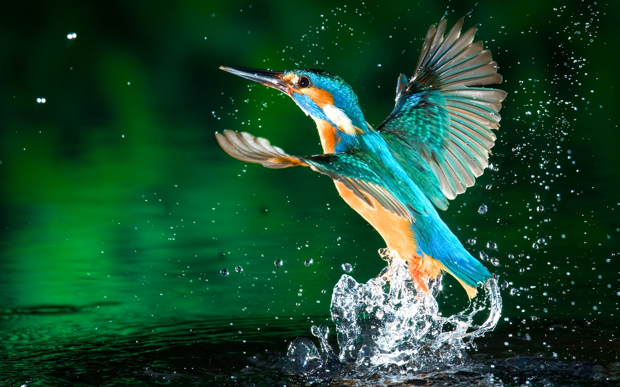 Kingfisher water