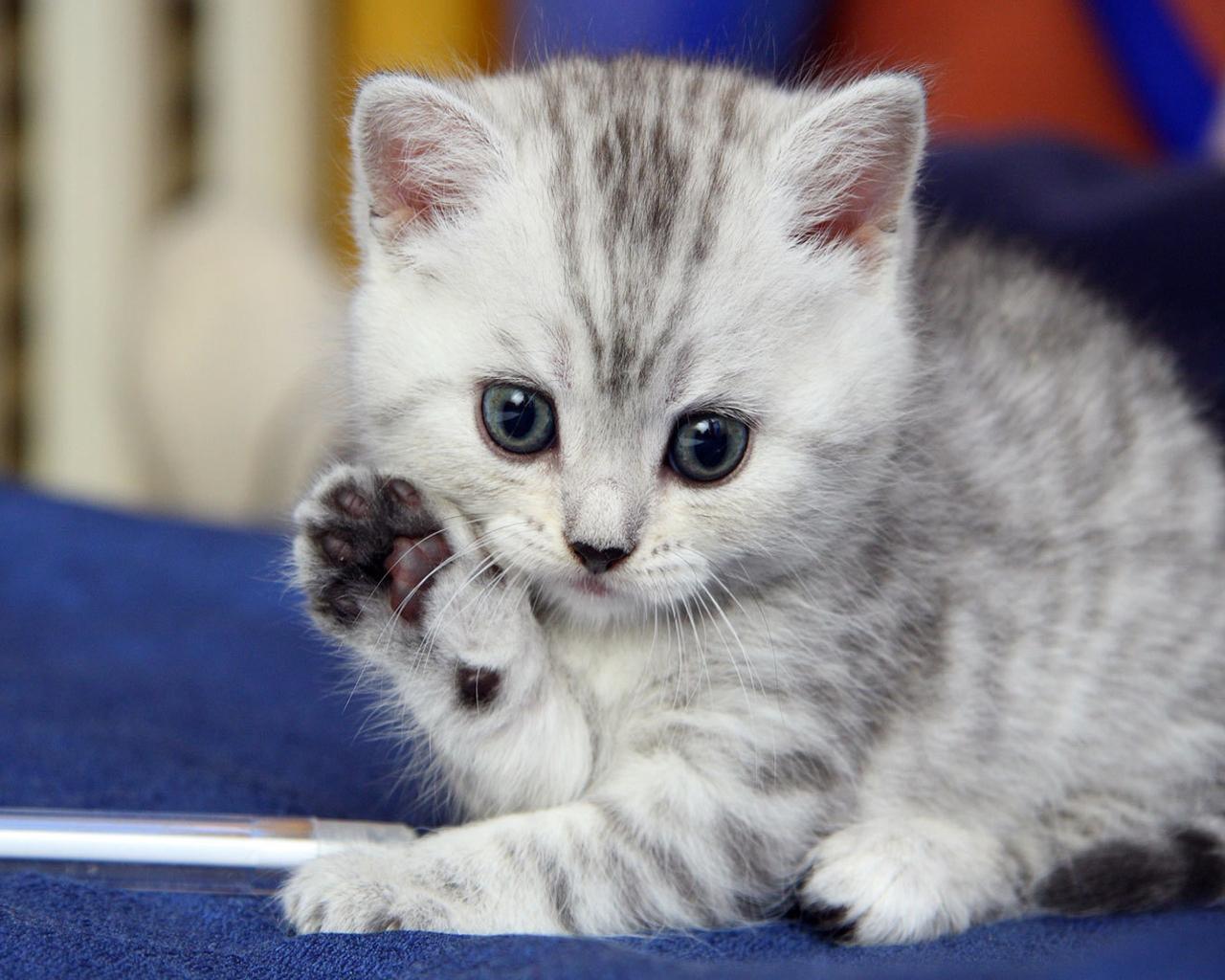 cute-kitten-saying-hello