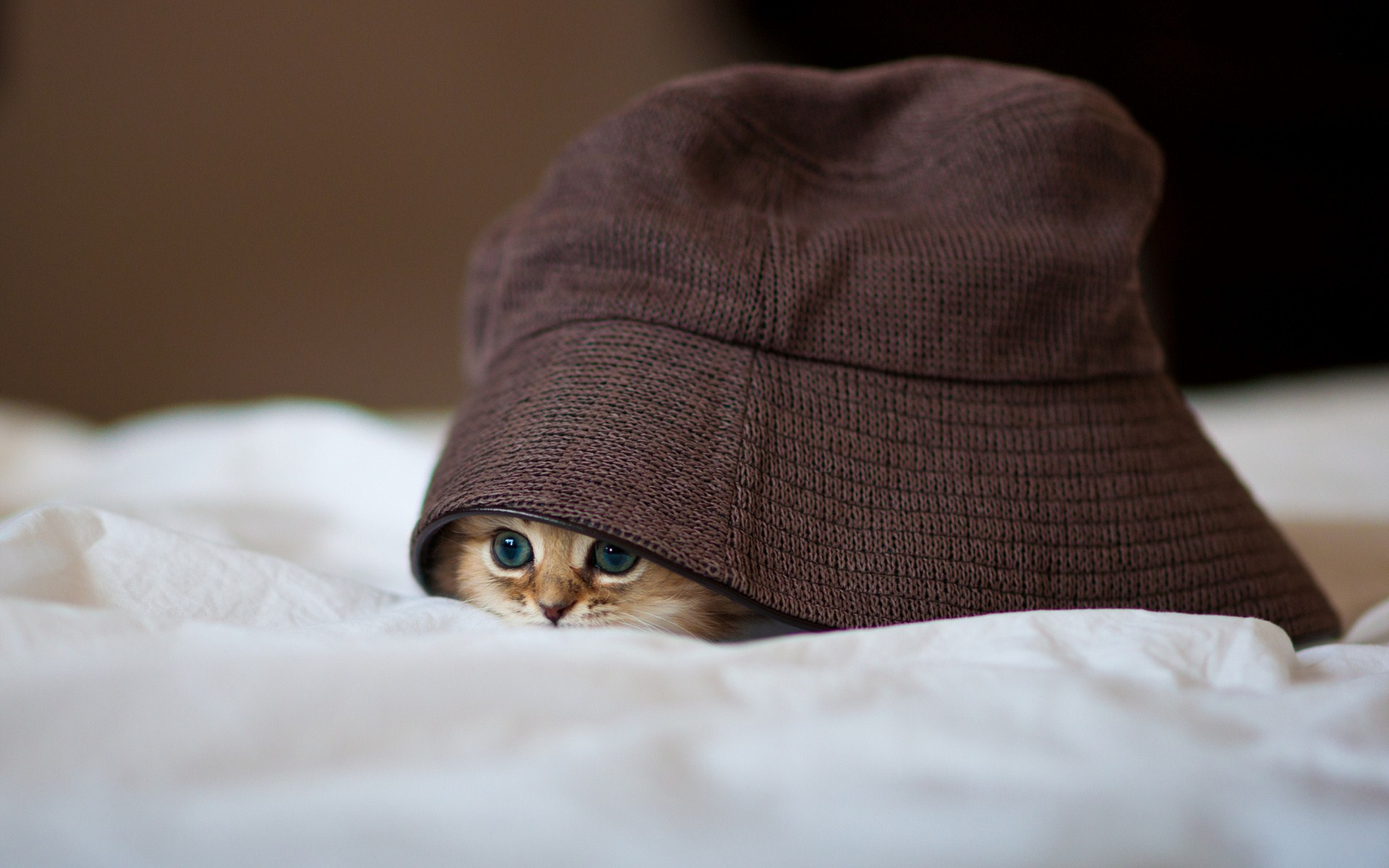Hat Little Kitten Hide Photo HD Wallpaper