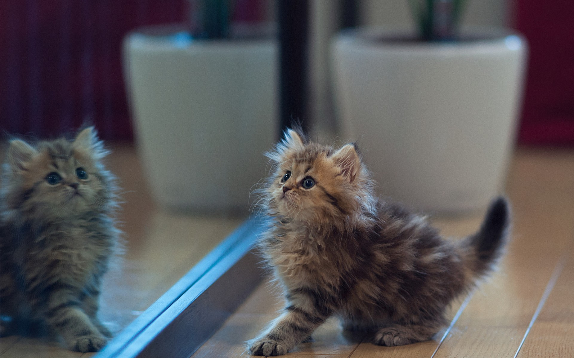 Cute Kitten Mirror Reflection