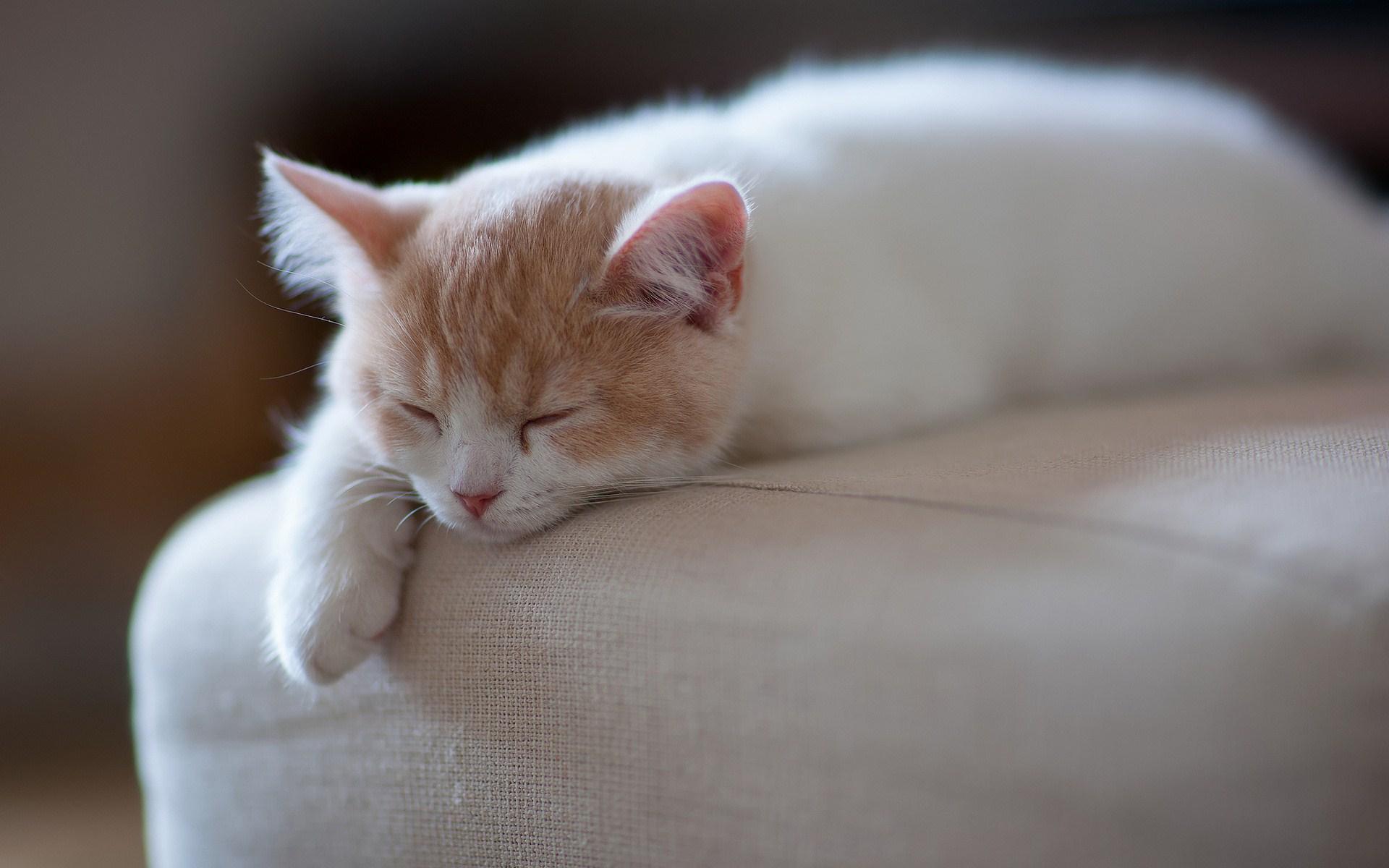 Kitten Rest