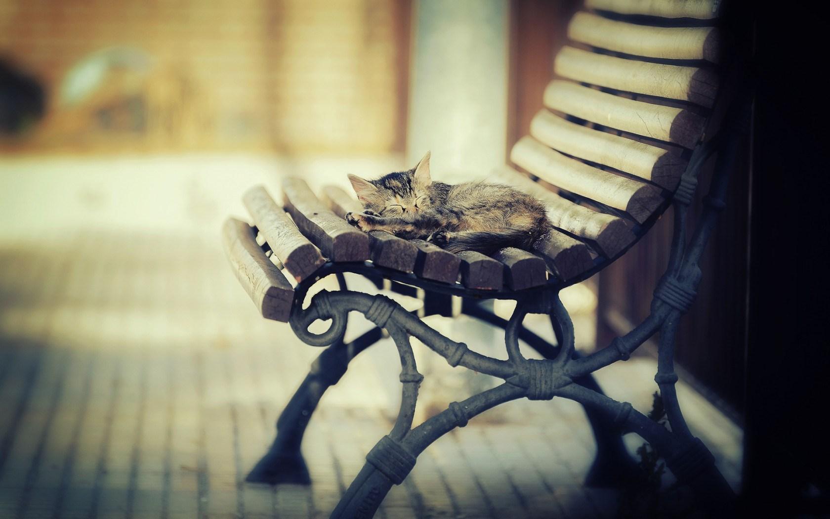 Kitten Sleep Bench