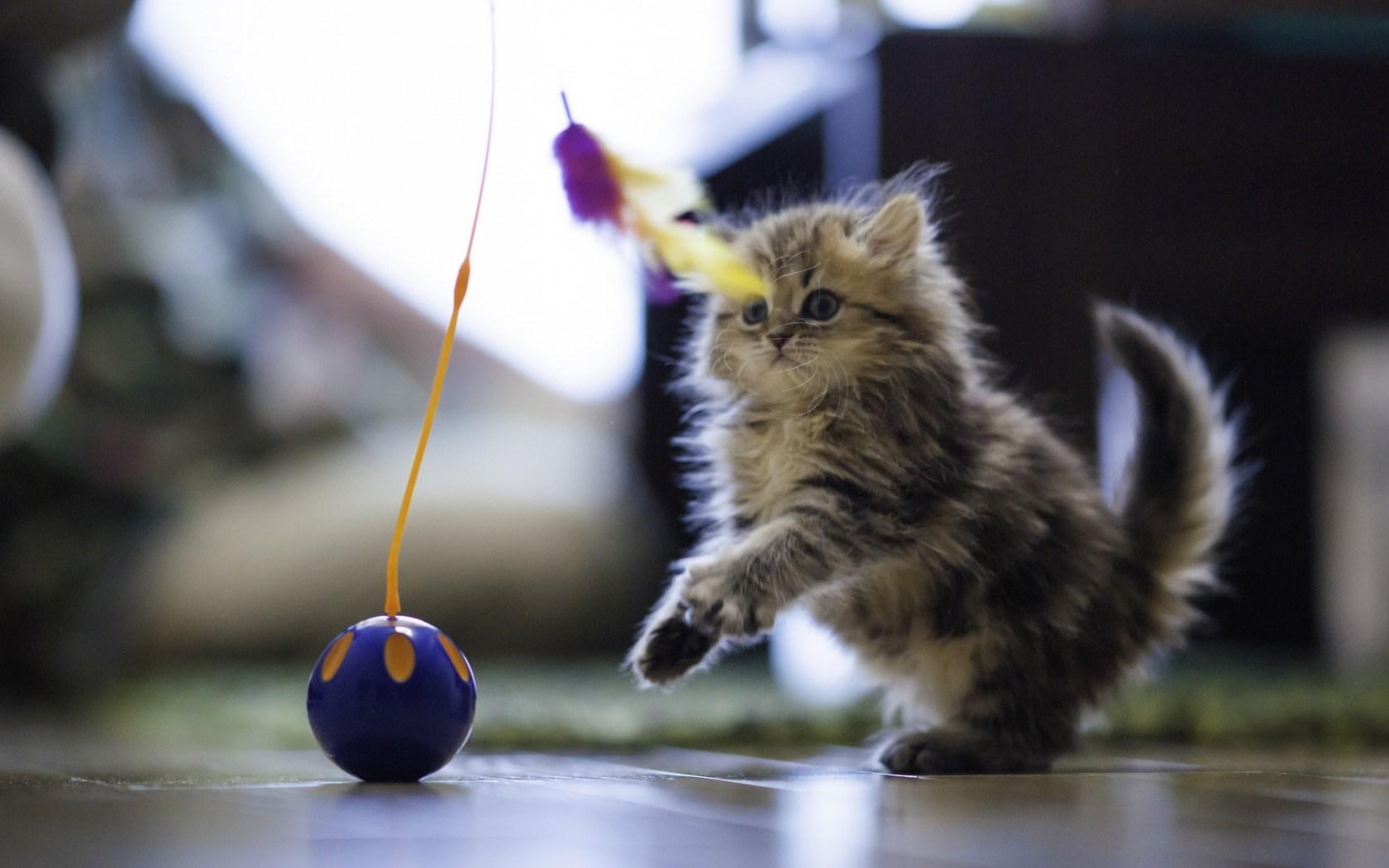 Kitten Toy Ball Feathers Play