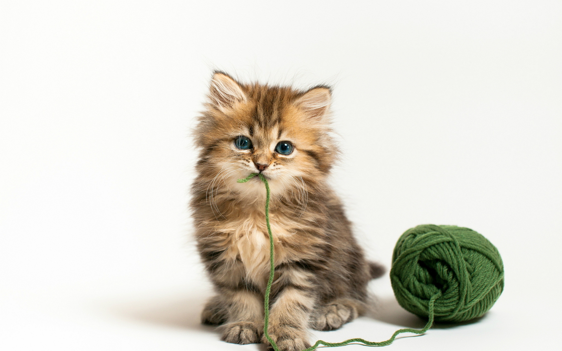 Kitten wool ball