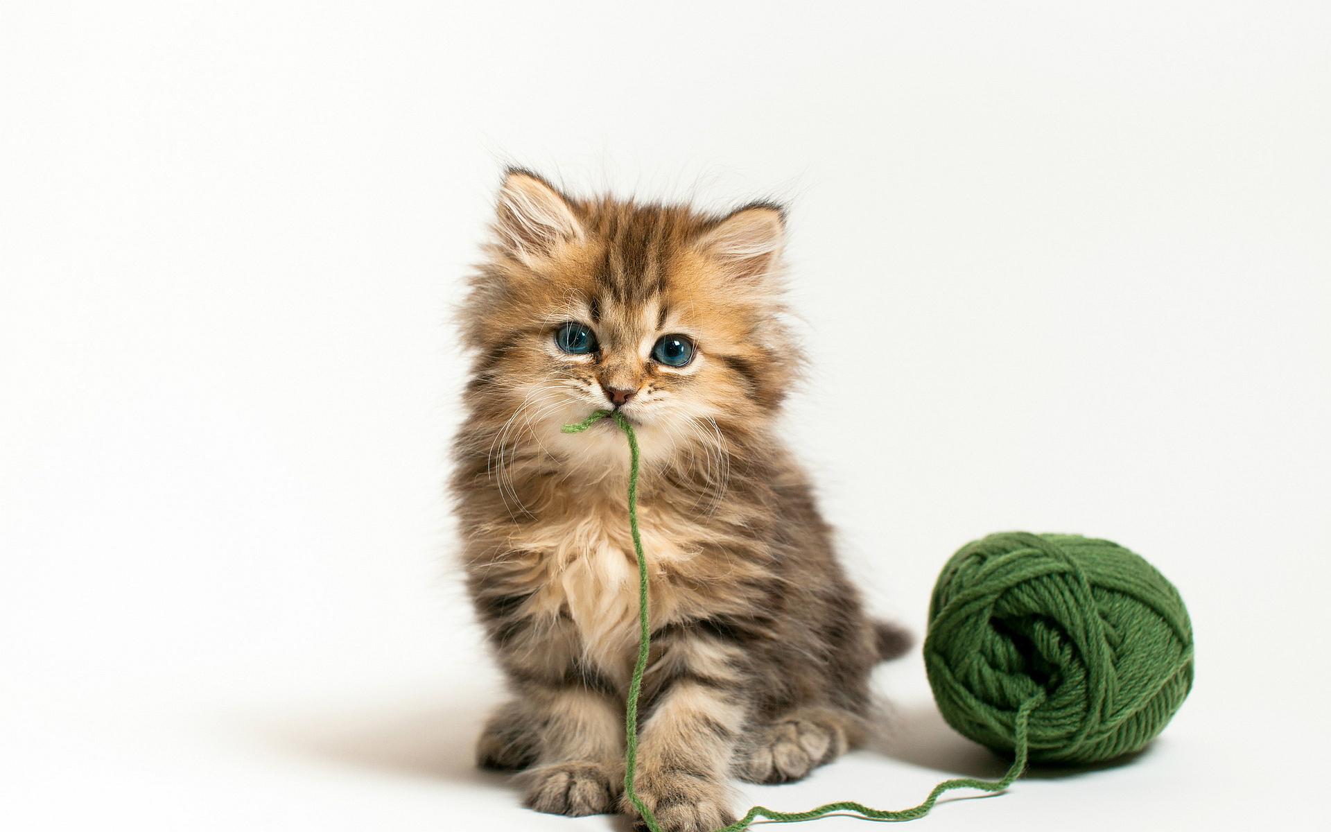 Kitten wool ball