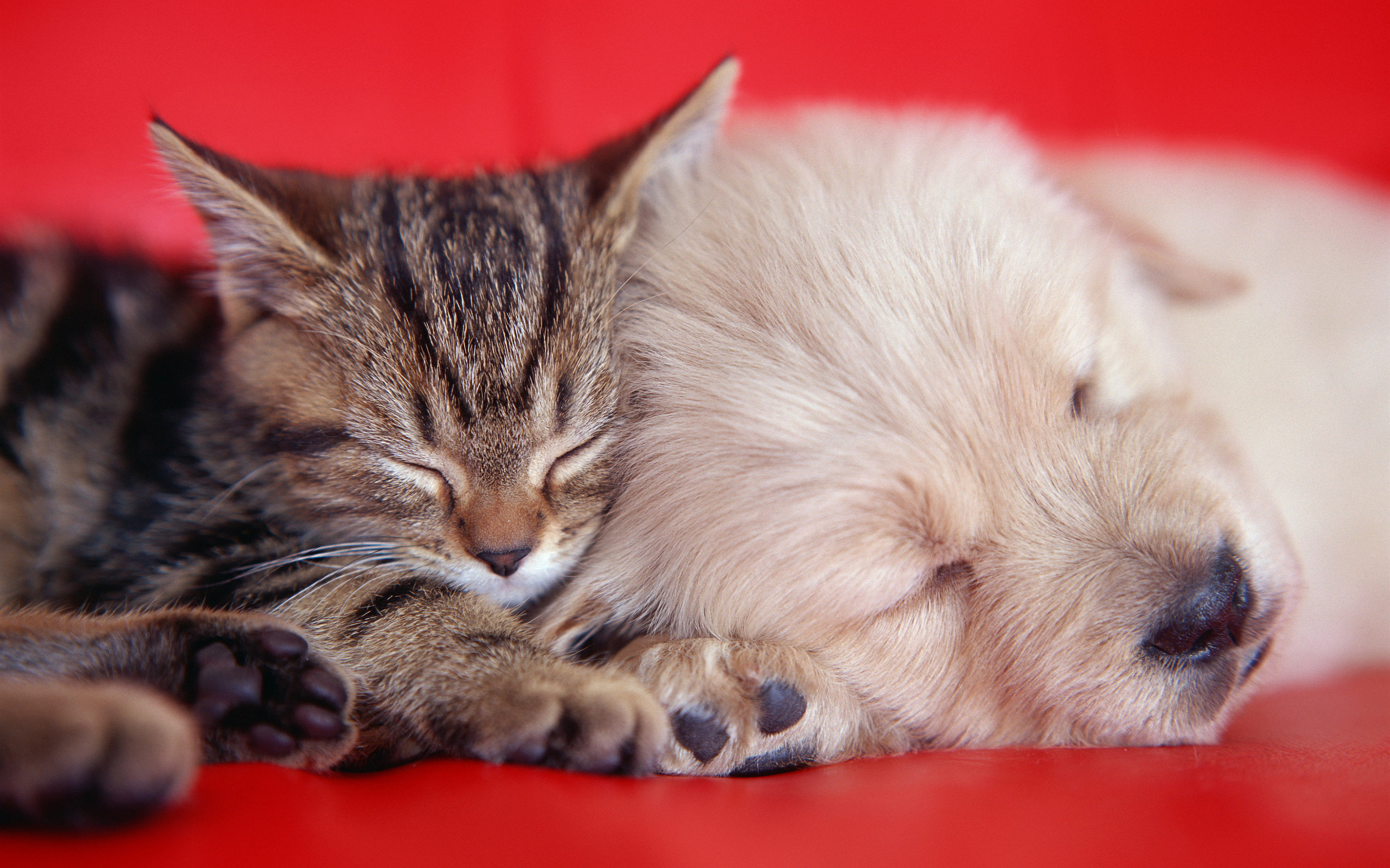 Kitty and puppy sleeping