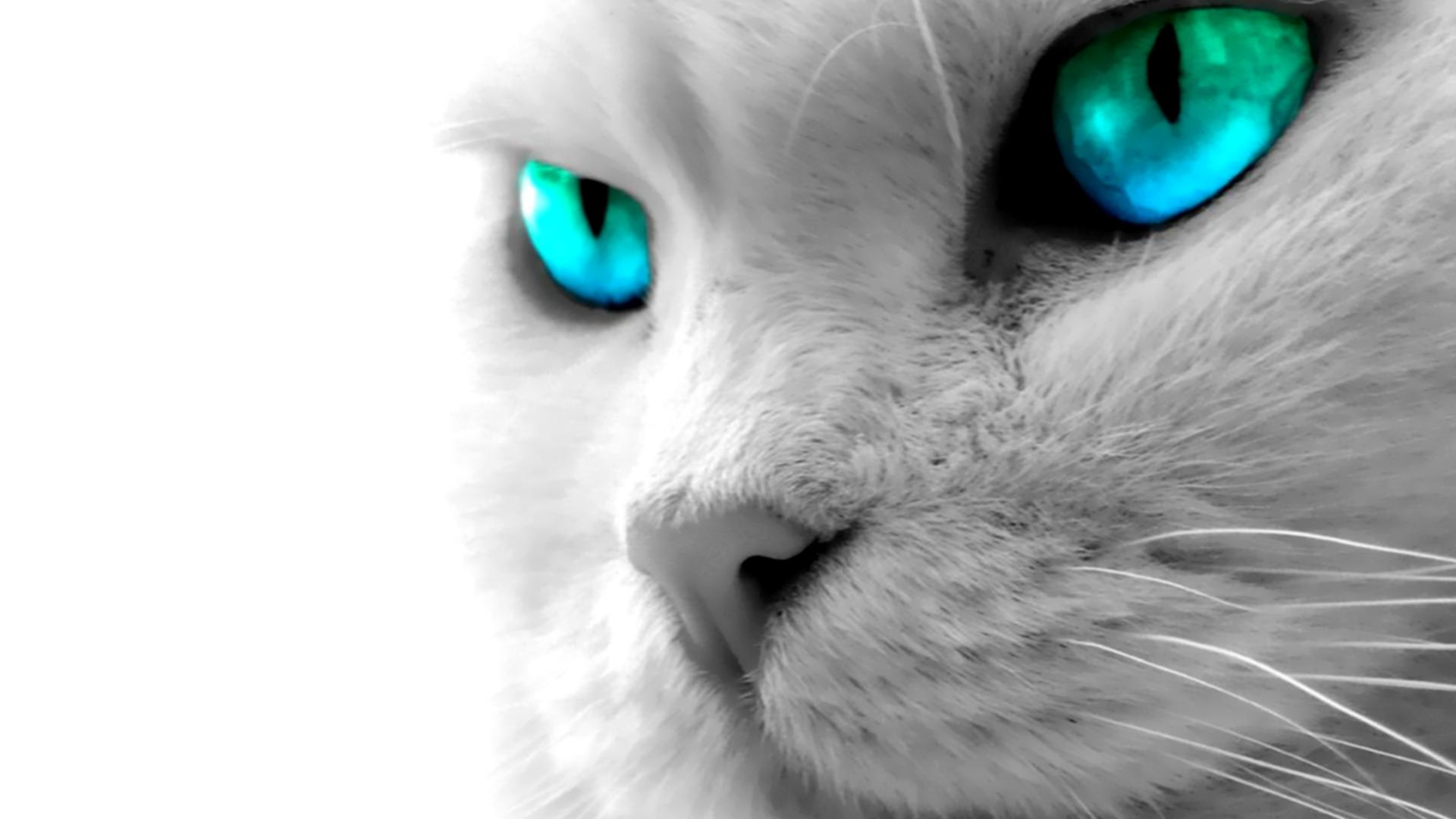 Kitty blue eyes hd