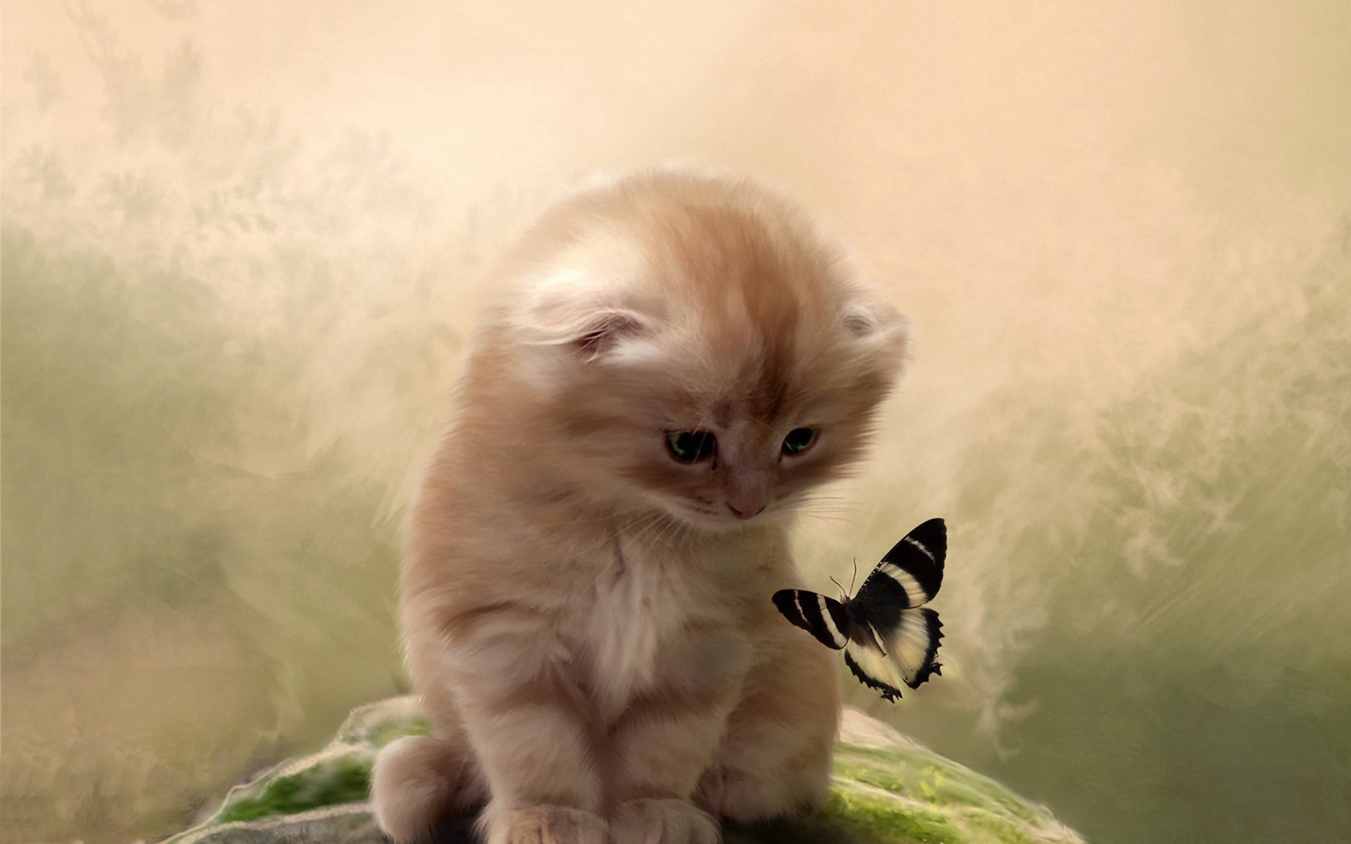 Kitty butterfly Wallpapers Pictures Photos Images. «