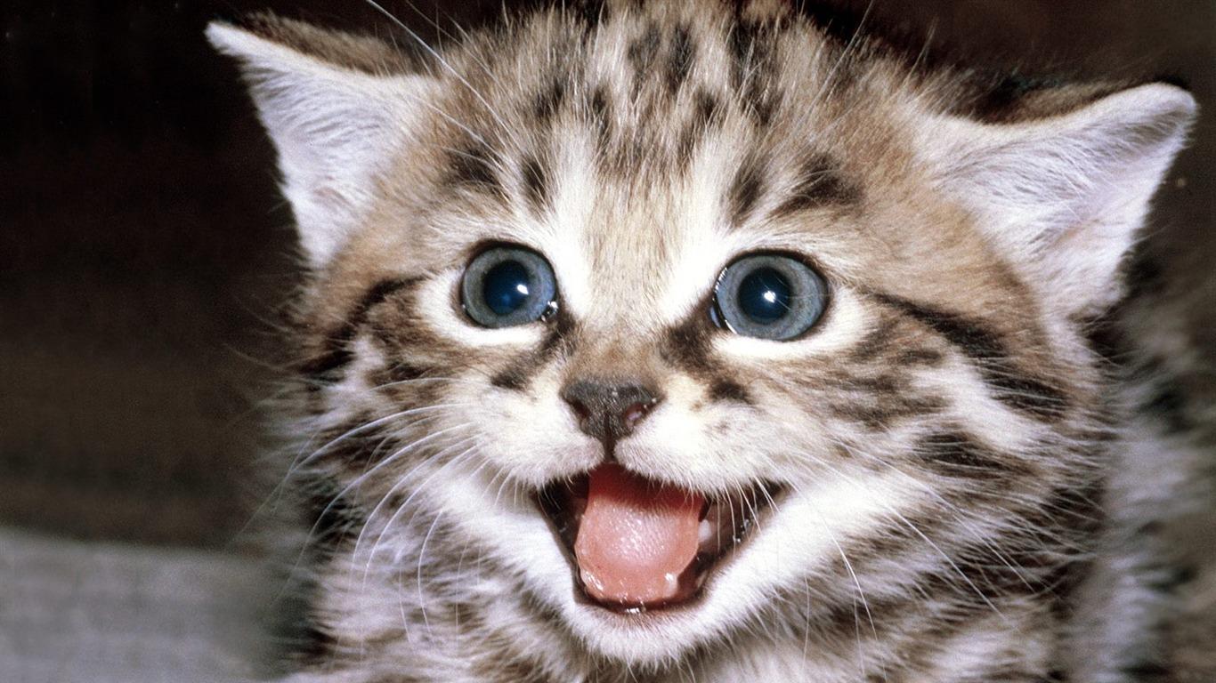 Cat Games Cute Little Kitty Cat Living Wallpaper