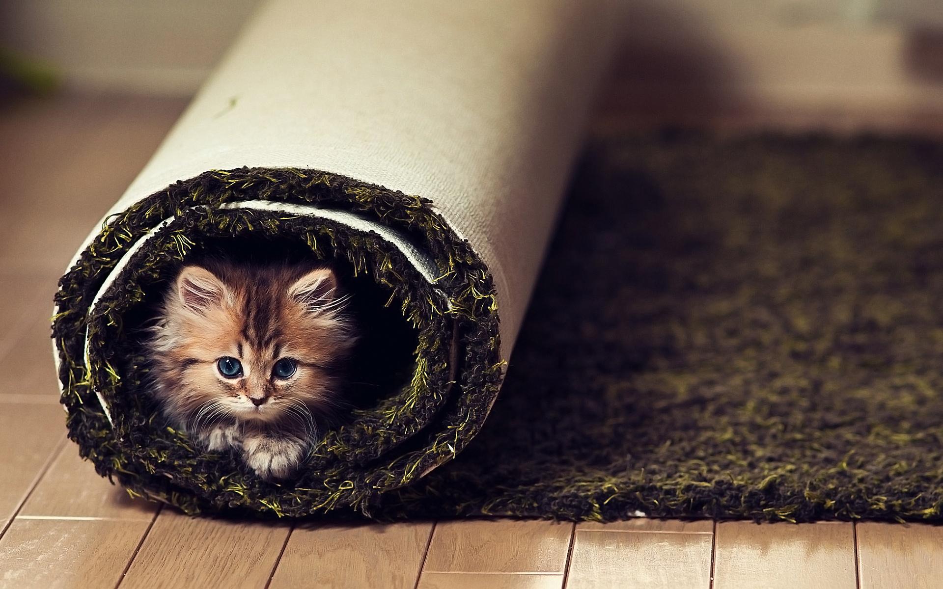 Kitty in Carpet
