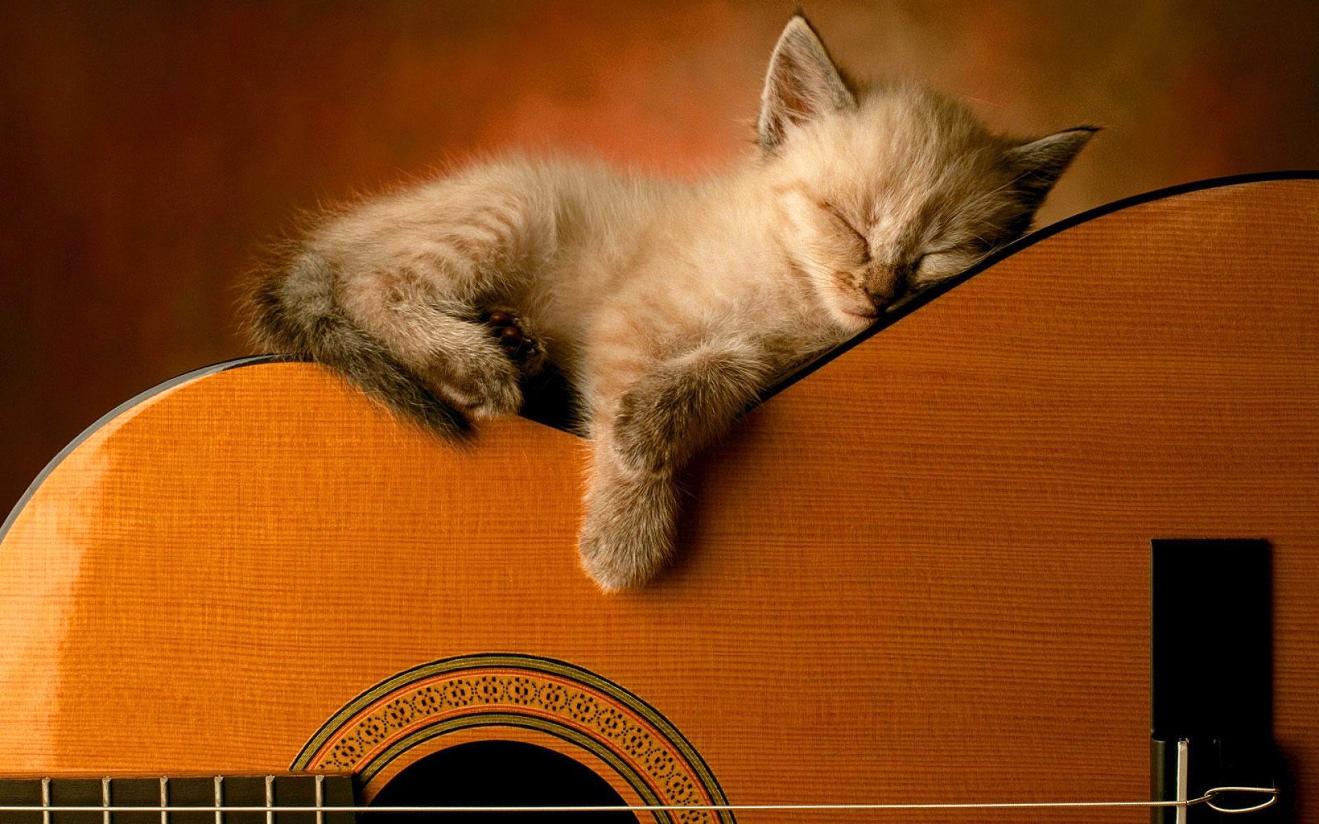 Kitty sleep on guitar