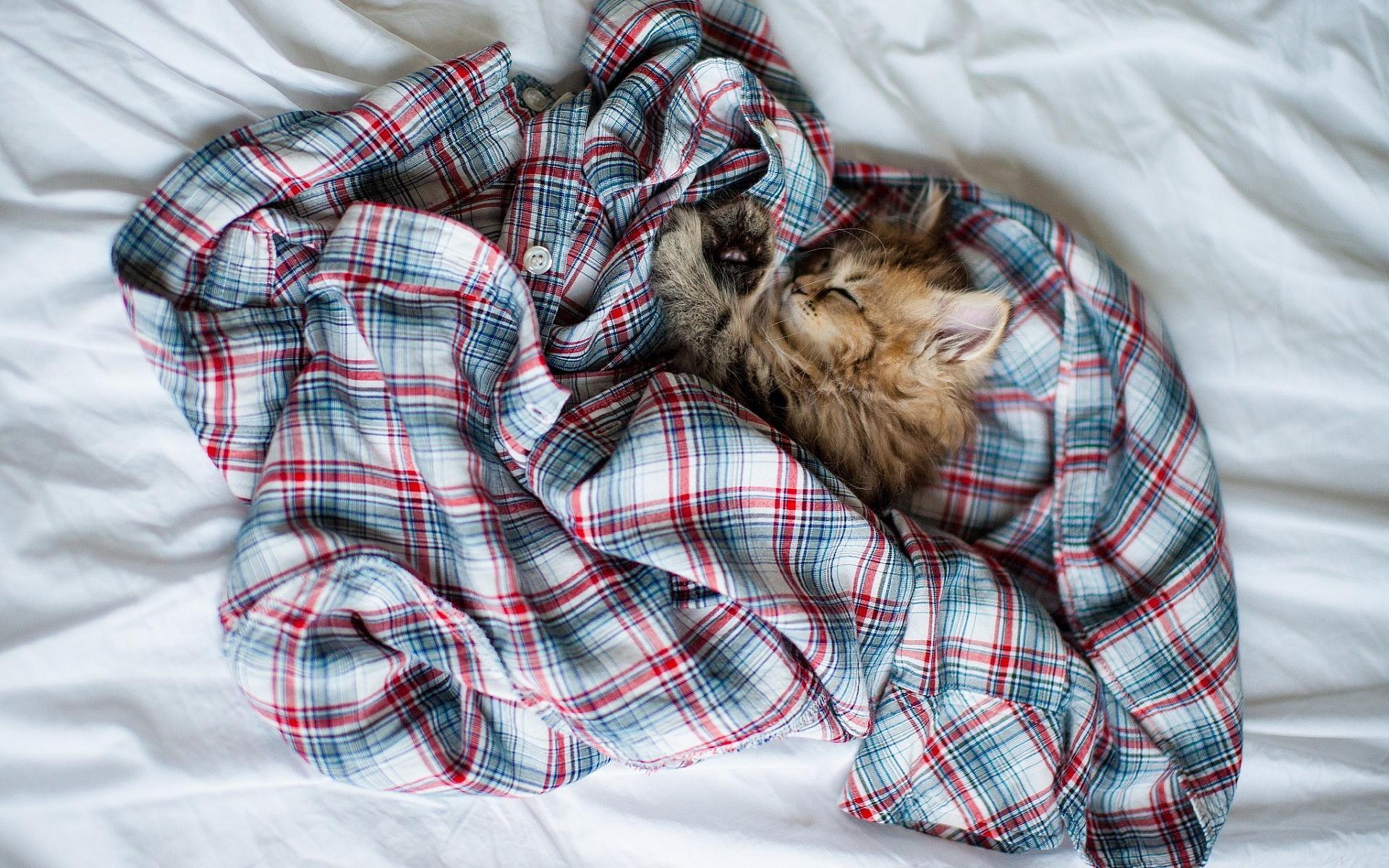 Kitty sleep shirt