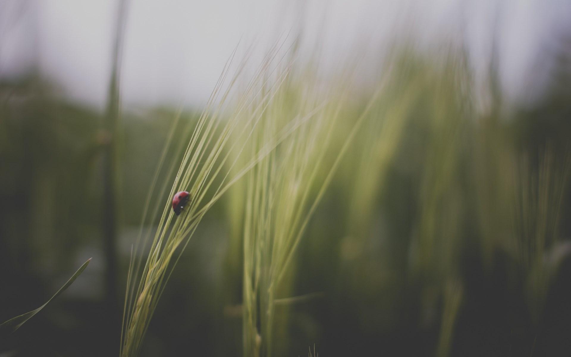 Ladybug Field Macro Nature
