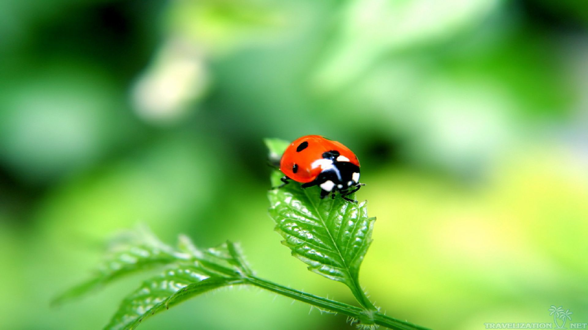 ... 2560×1920. Keep Steady Ladybug Wallpapers