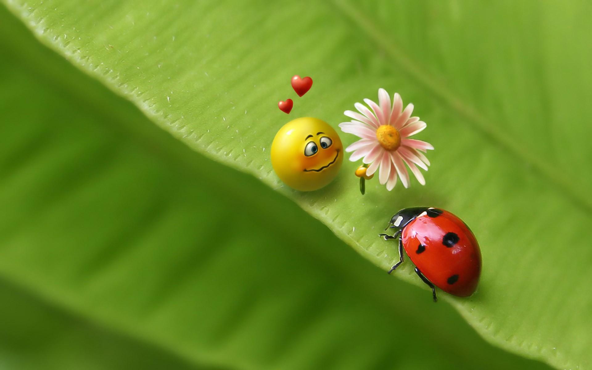 Humor - Ladybug Wallpaper