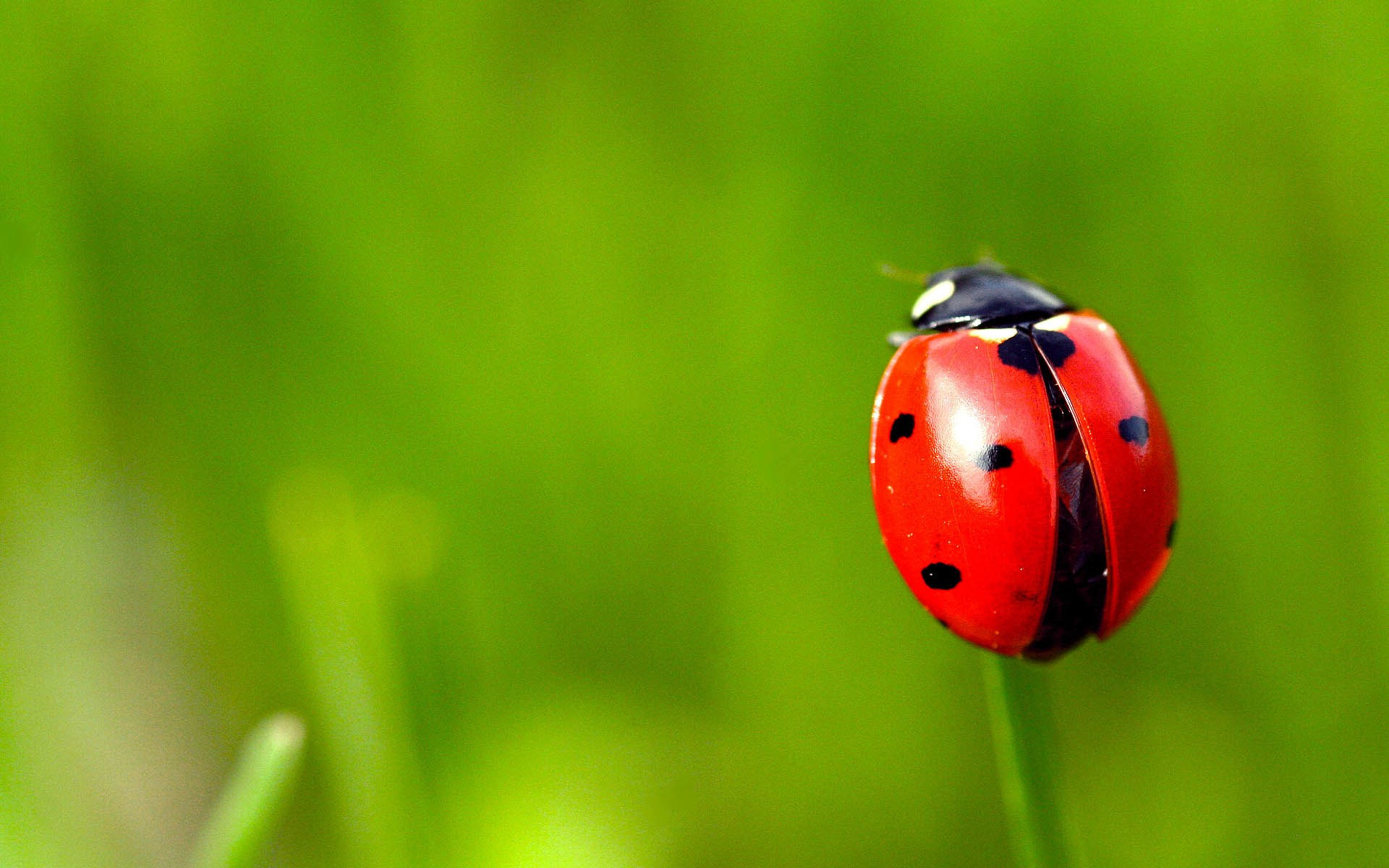 Grass Ladybug HD Wallpaper is a awesome hd photography. Free to upload, share the high definition photos. Grass Ladybug HD Wallpaper is a part of stock ...