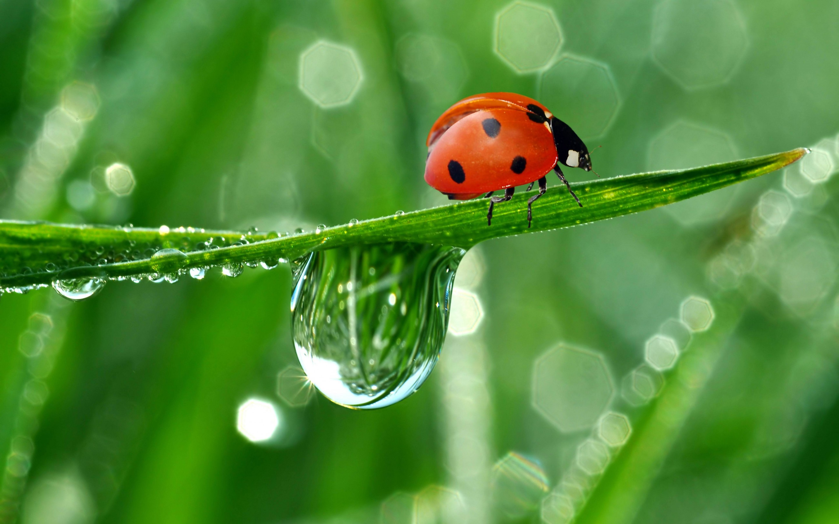 10 Lovely HD Ladybug Wallpapers