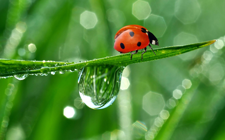 10 Lovely HD Ladybug Wallpapers