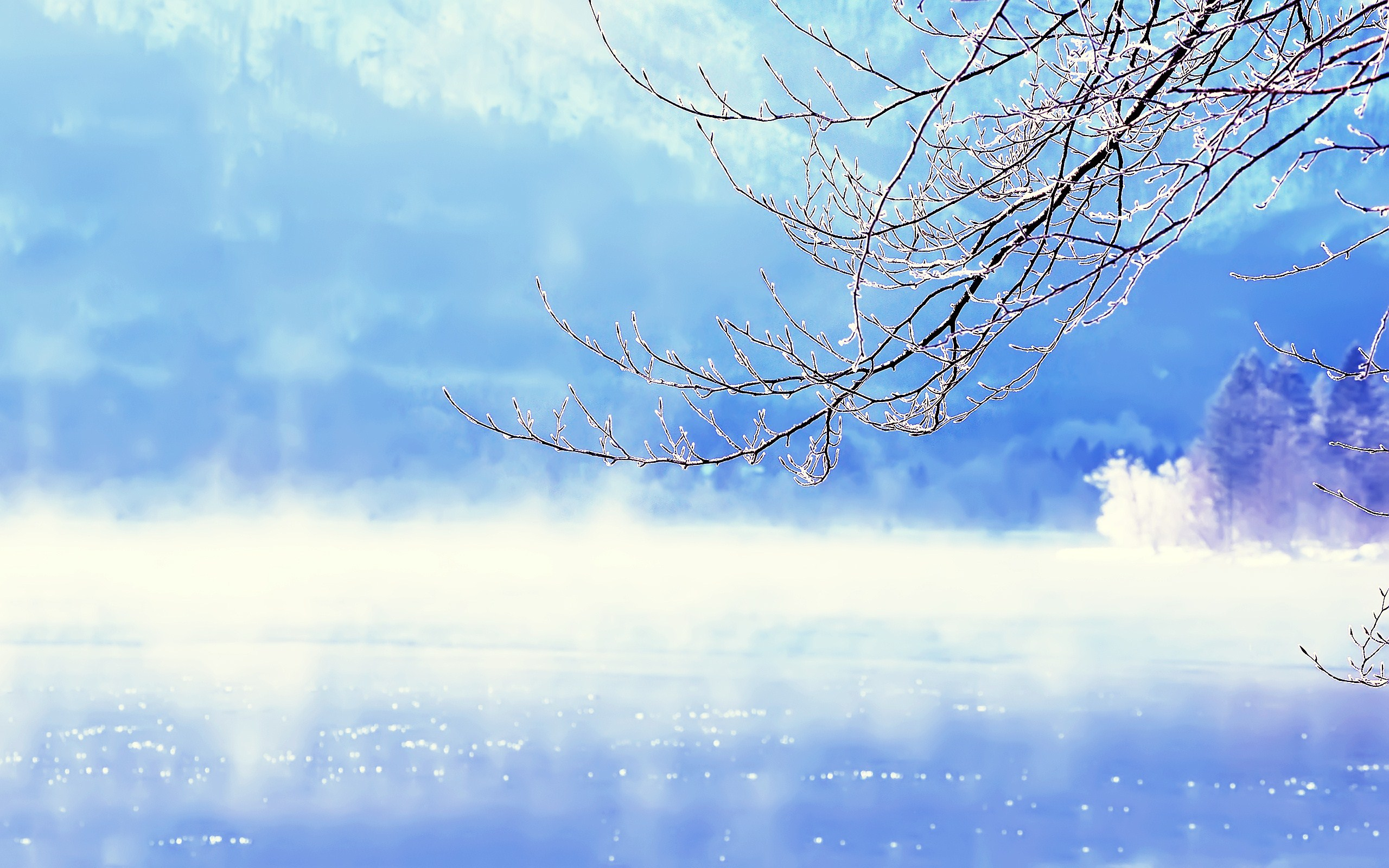 Lake Winter Branches Nature HD wallpaper 2560x1600 ...