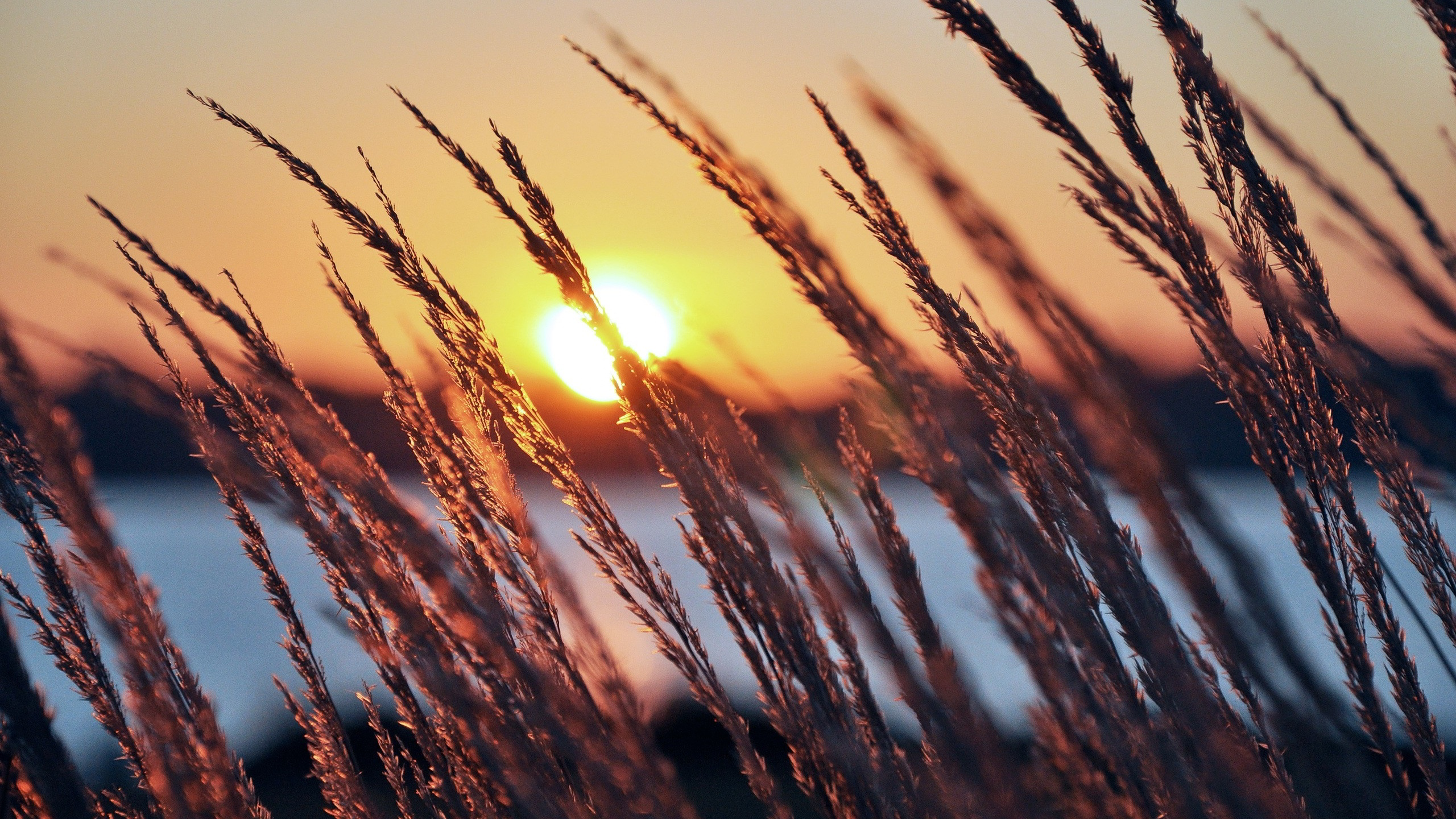 Lakeside sunset grass