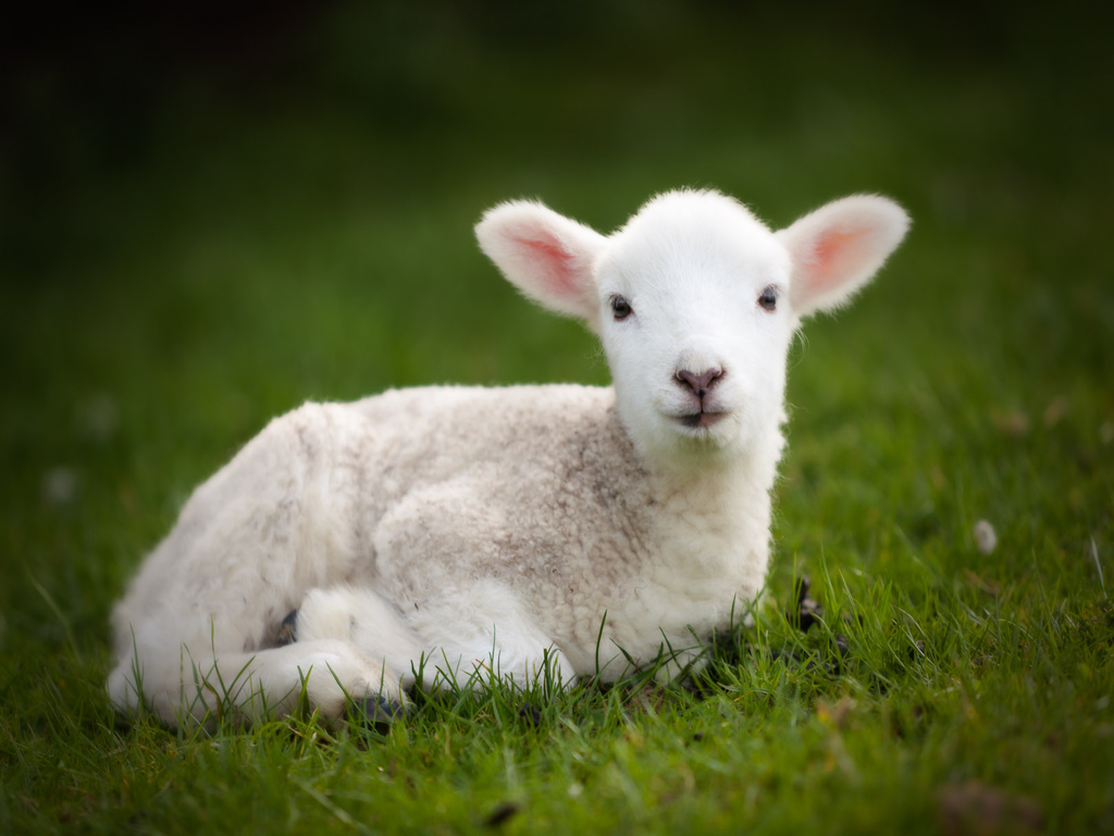 Asda apologises after selling imported lamb as a UK product | Herald Scotland
