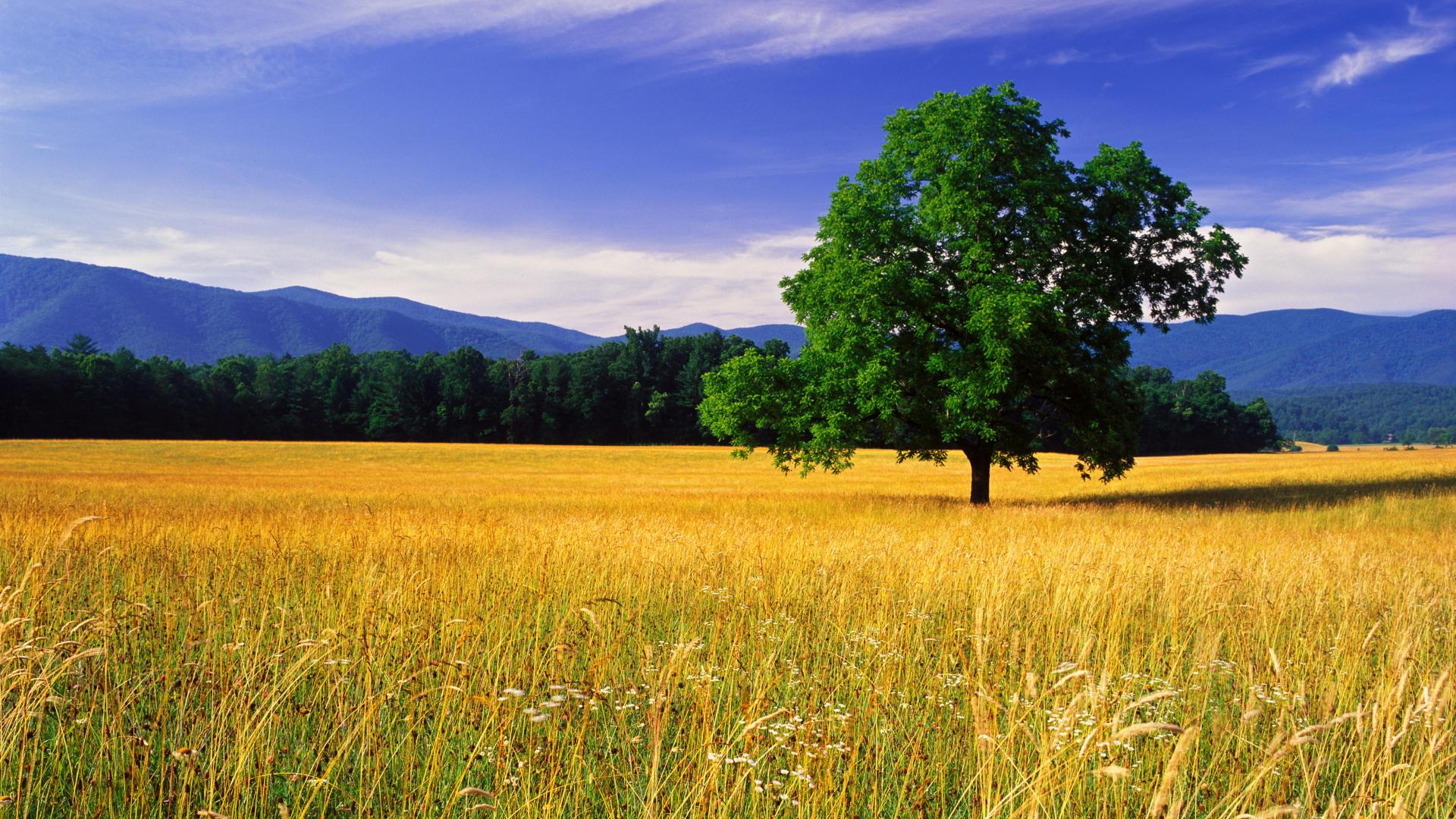 Great landscape s wallpaper 1920x1080 27185 for Good landscape