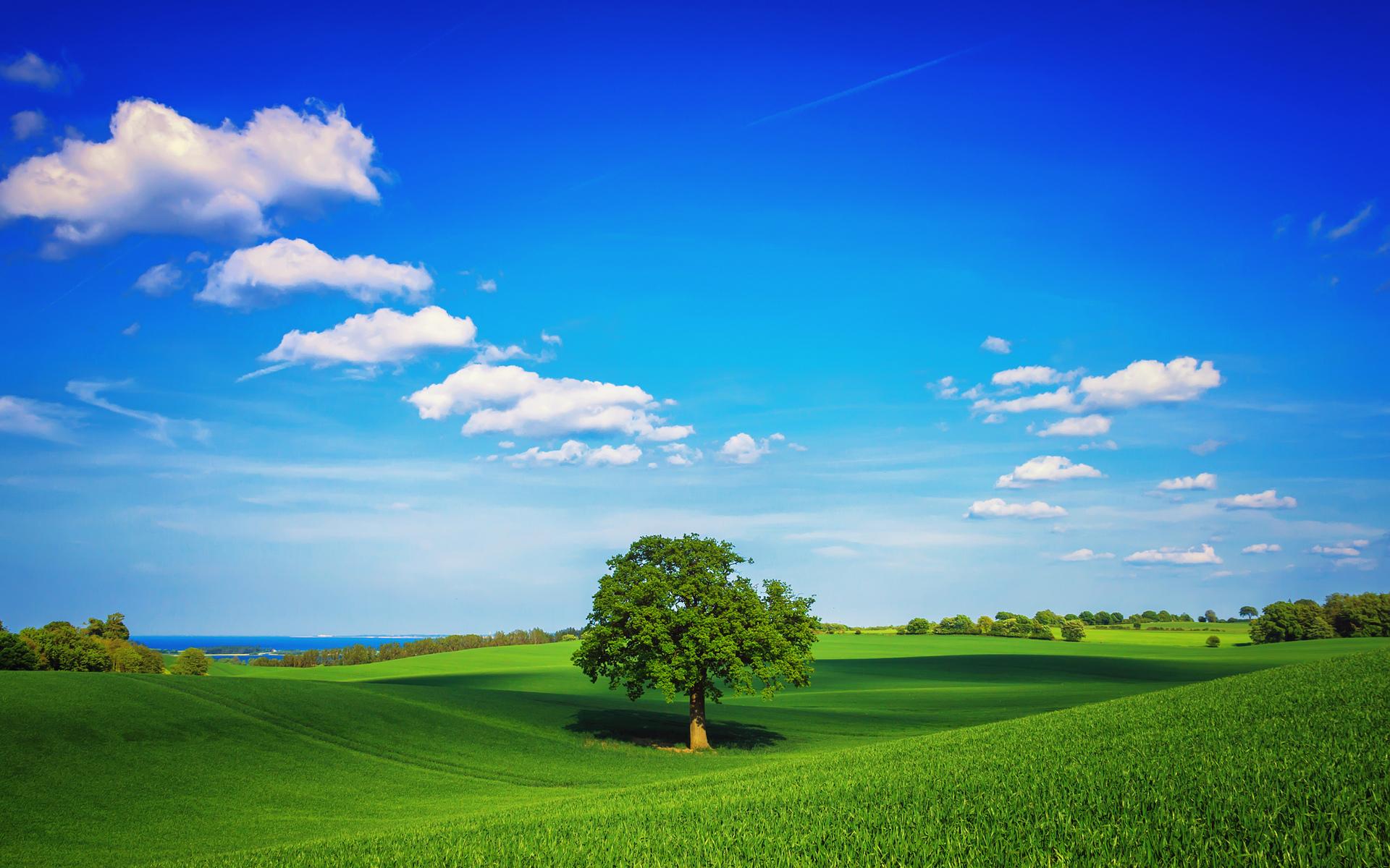 ... Ideal landscape ...