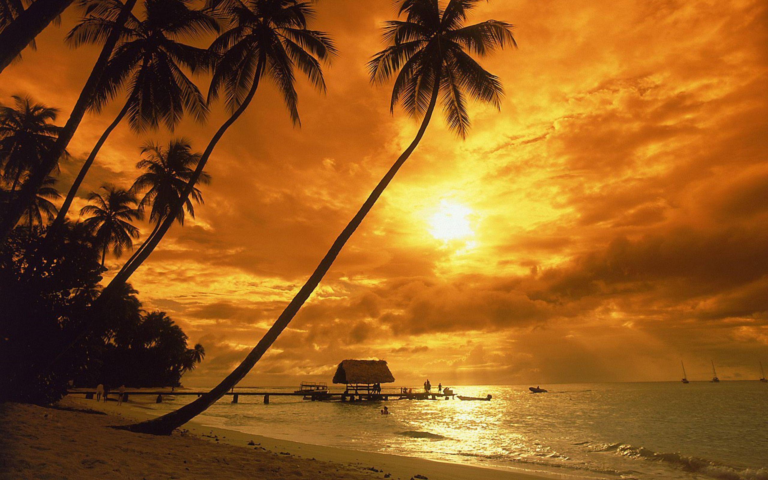 New Sunset Beach Coconut Landscape