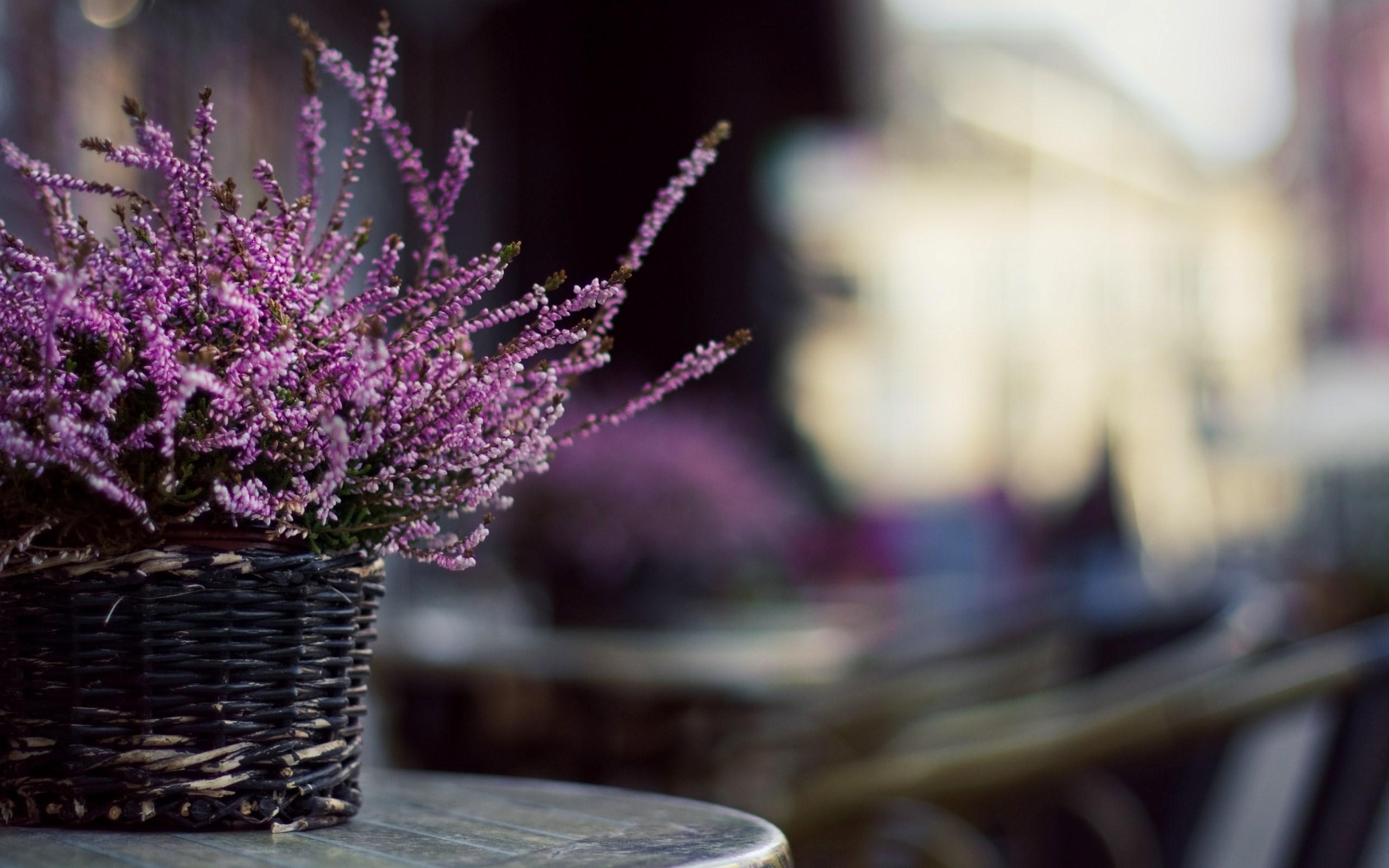 Flowers Lavender Basket Macro