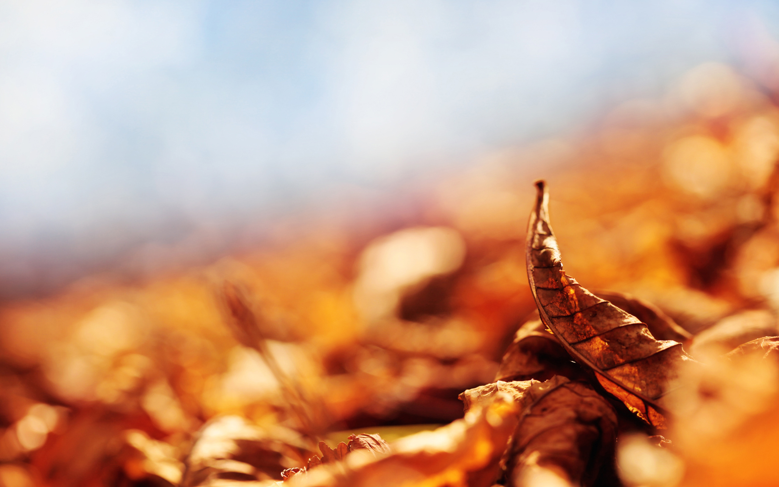 Autumn leaves blur