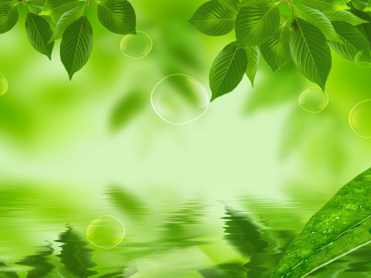 Fresh and natural green leaf wallpaper image 1280x960 hd wallpaper for desktop download,background image,wallpaper and Online Stock Photo Images