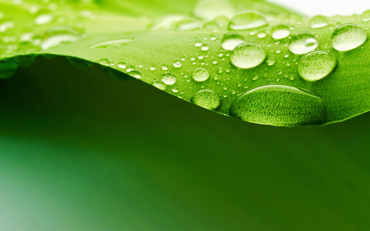 dew drop on leaf hd wallpapers