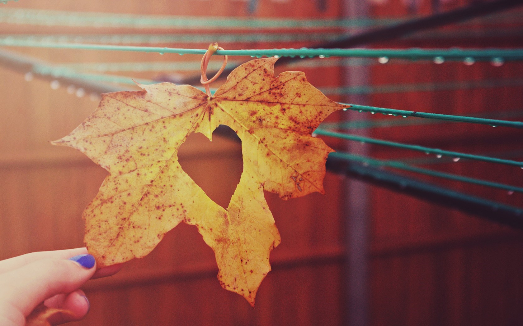 Leaf Heart Drops Autumn