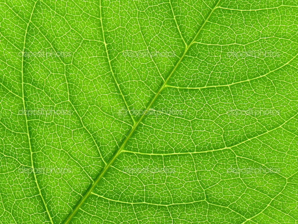 Vibrant green leaf macro close up natural background. — Photo by SRphotos
