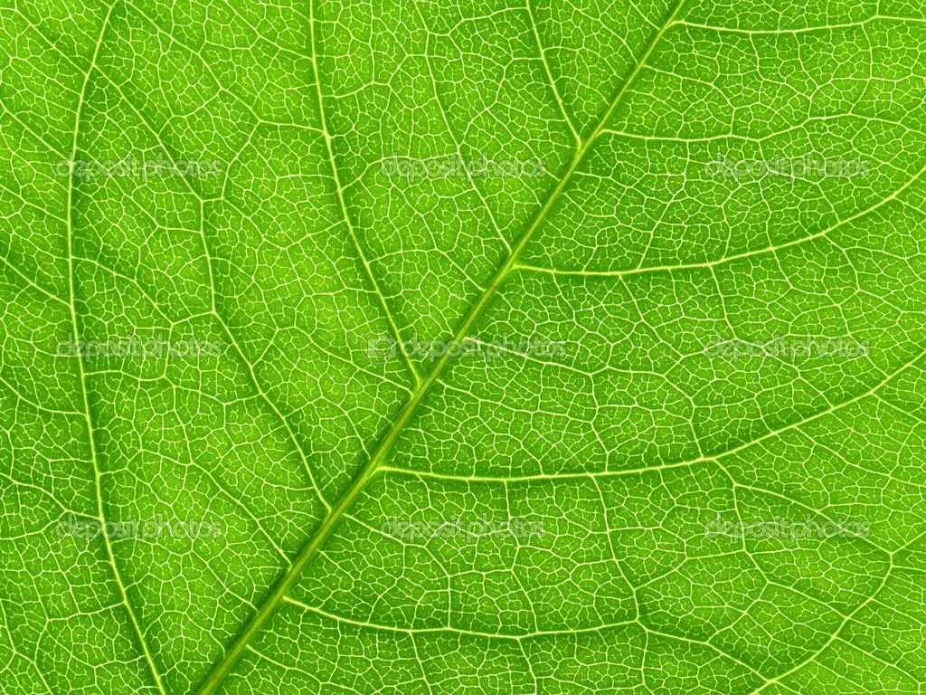 Leaf Closeup 111