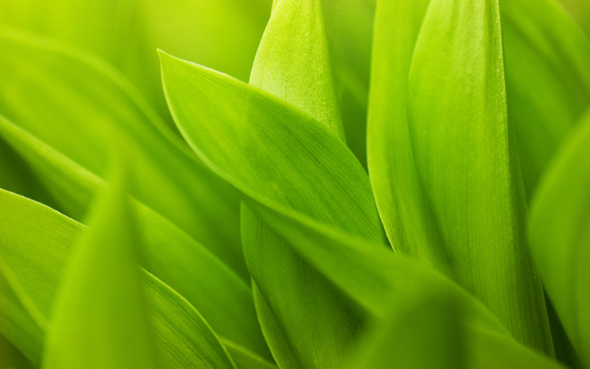 Leaf Macro Wallpaper HD