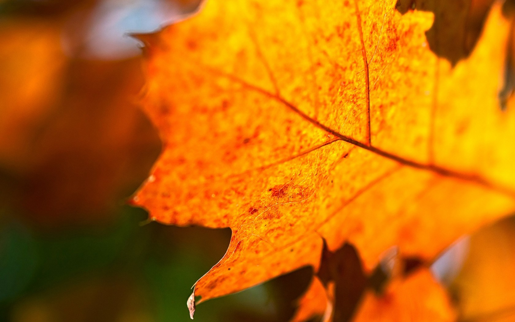 Leaf Orange Autumn Nature Macro