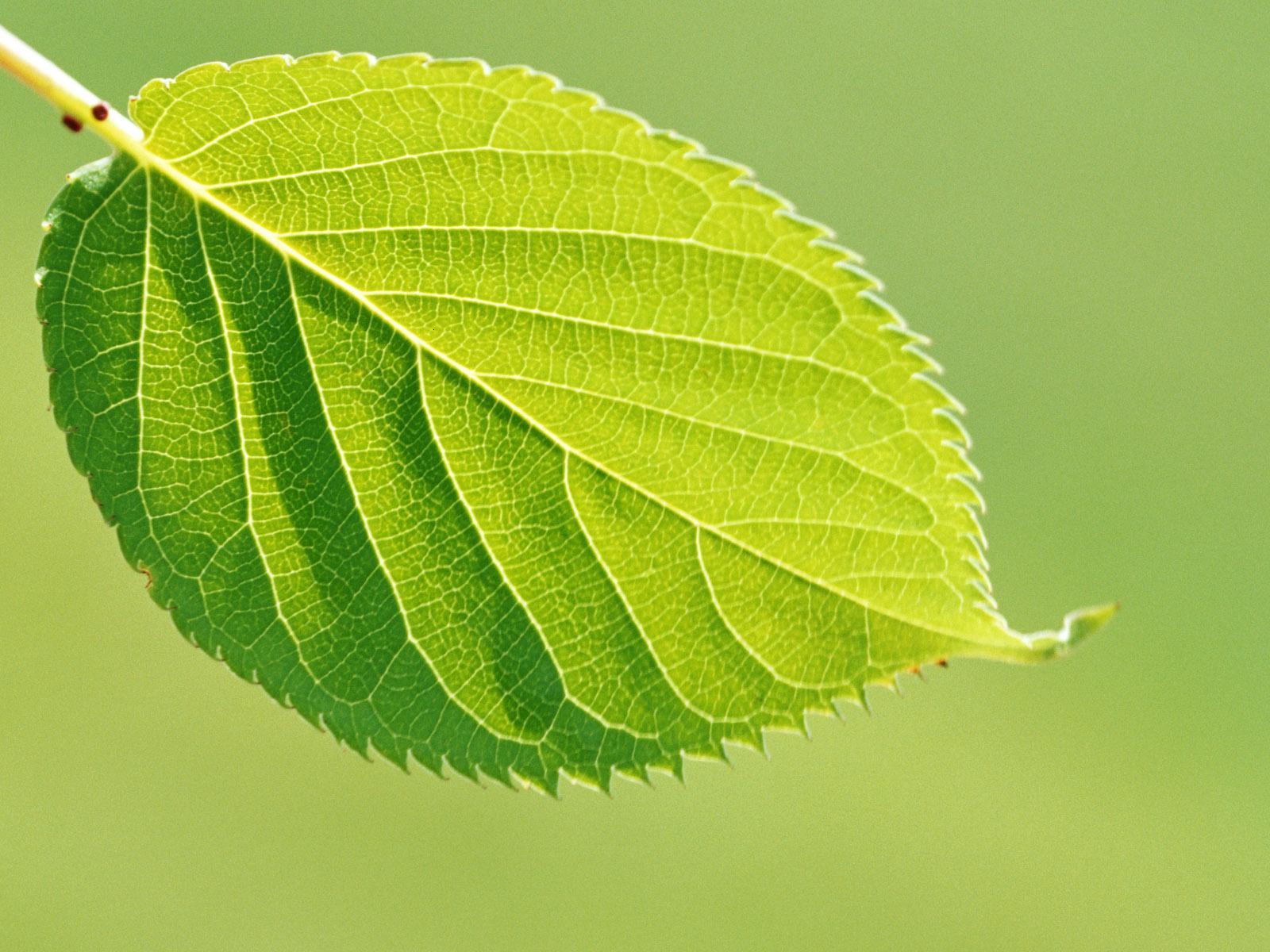 Green leaf vec