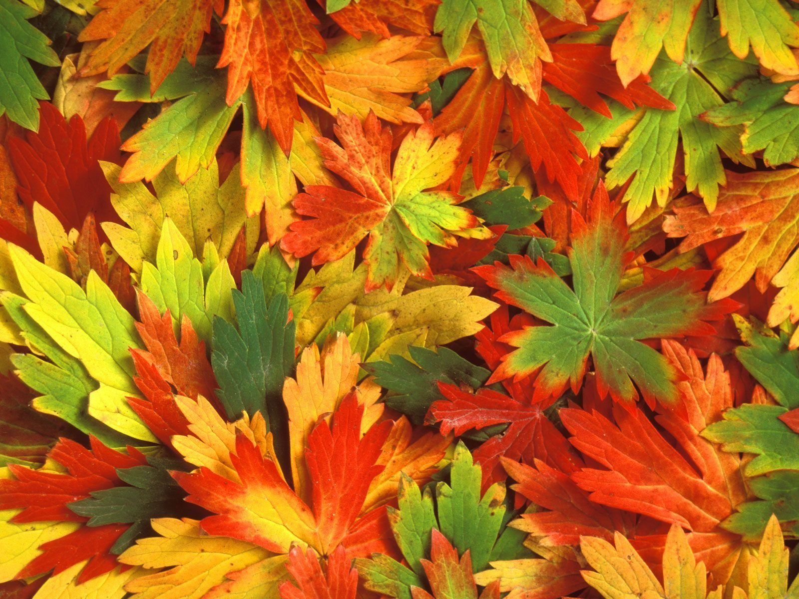 Cool Leaf Wallpaper