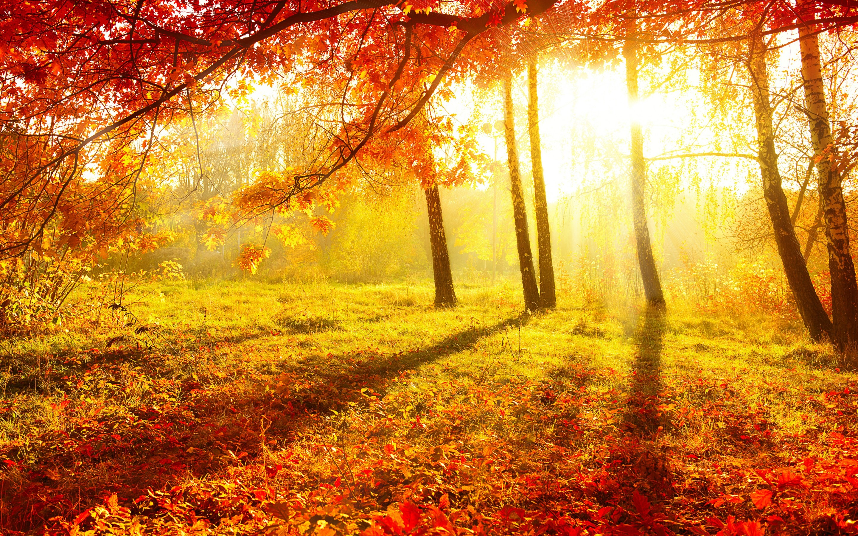 nature autumn forest trees leaves burgundy grass sun light wallpaper background