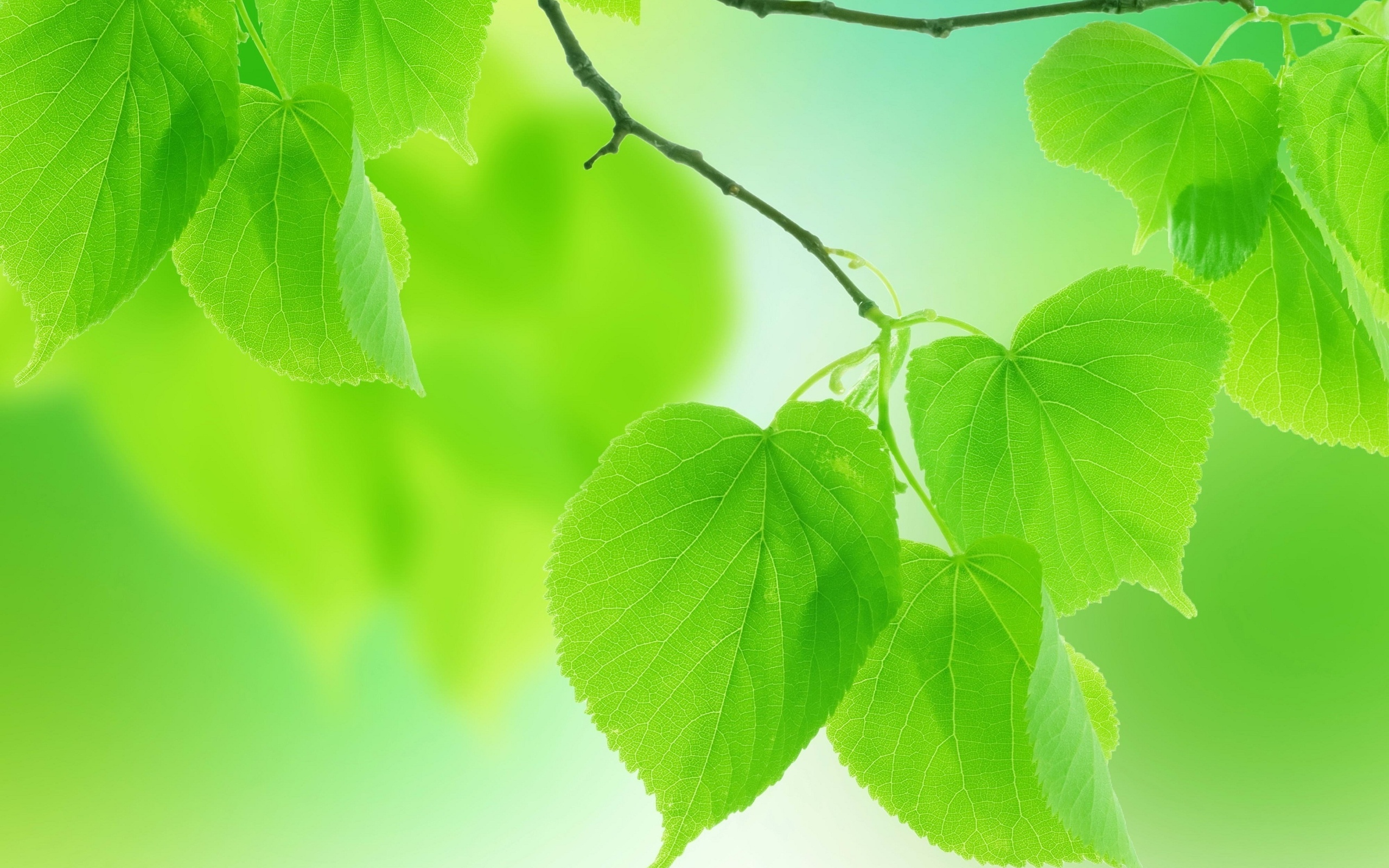 ... Leaf Wallpaper ...