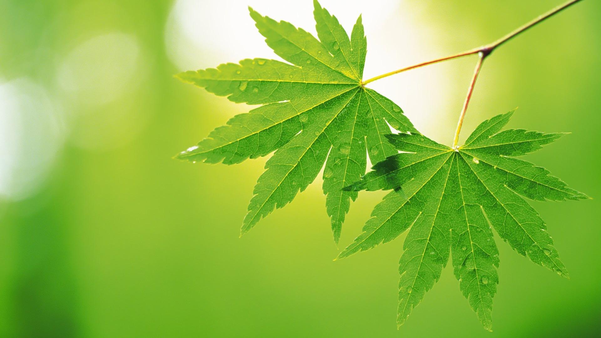 Free Leaf Wallpaper