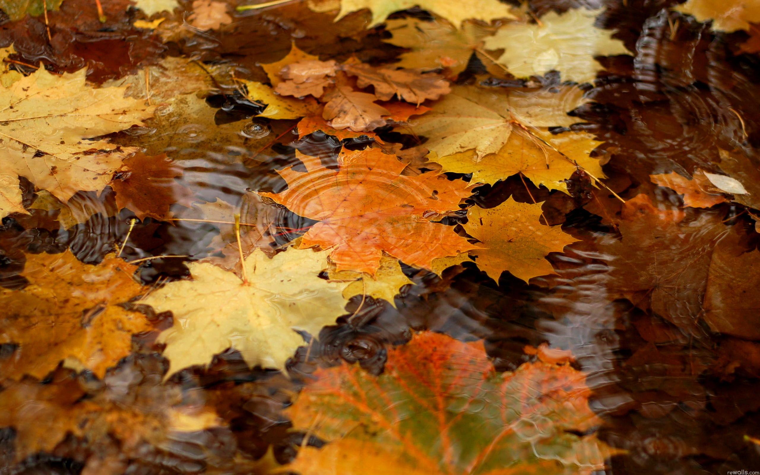 Leaf Water Autumn