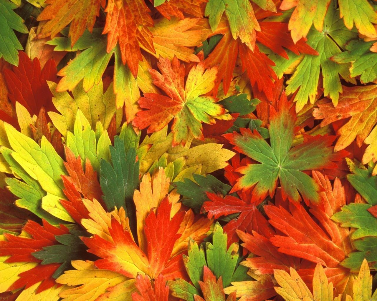 Wallpaper Tags: kaleidoscope autumn leafs