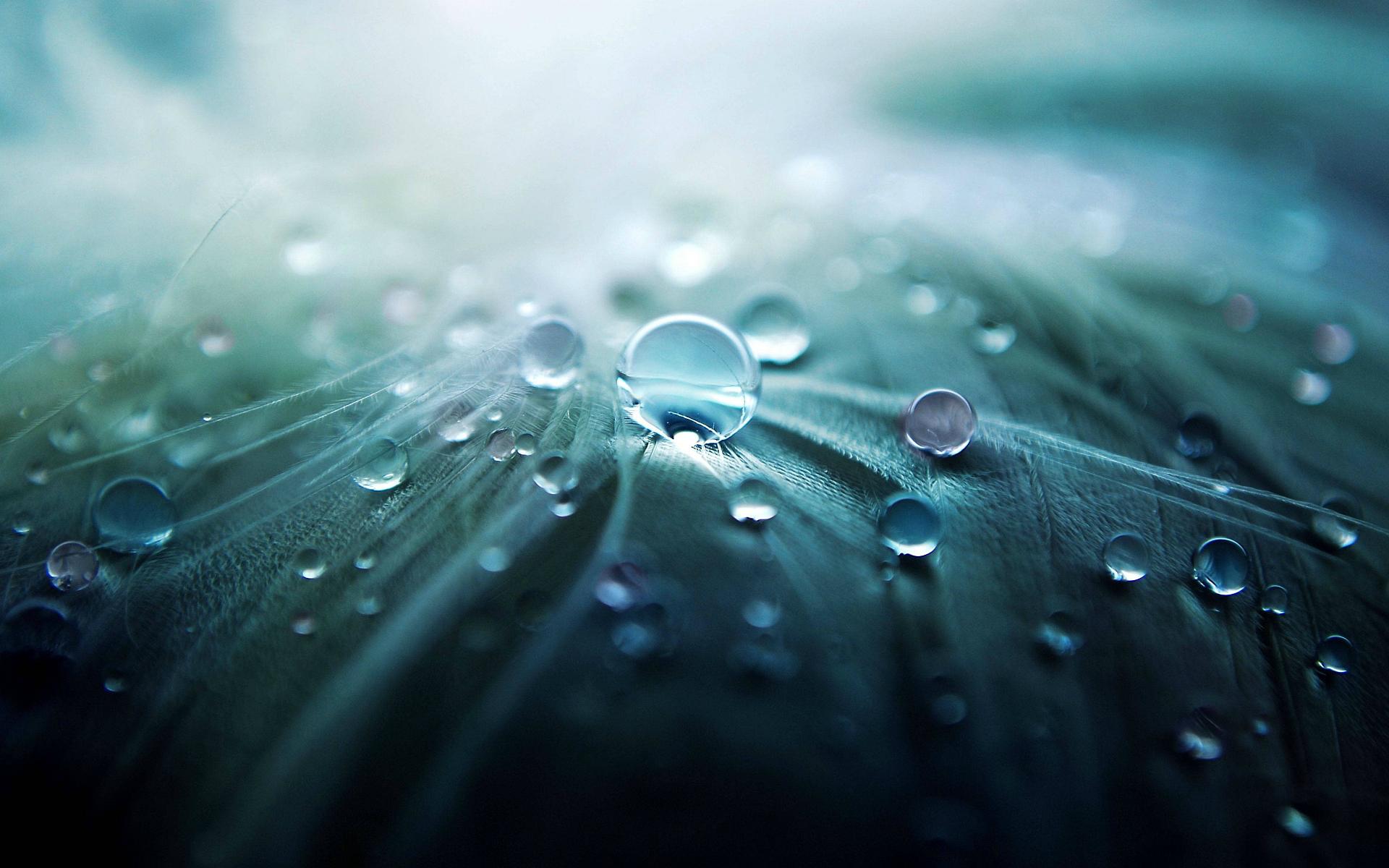 Leave water drops macro